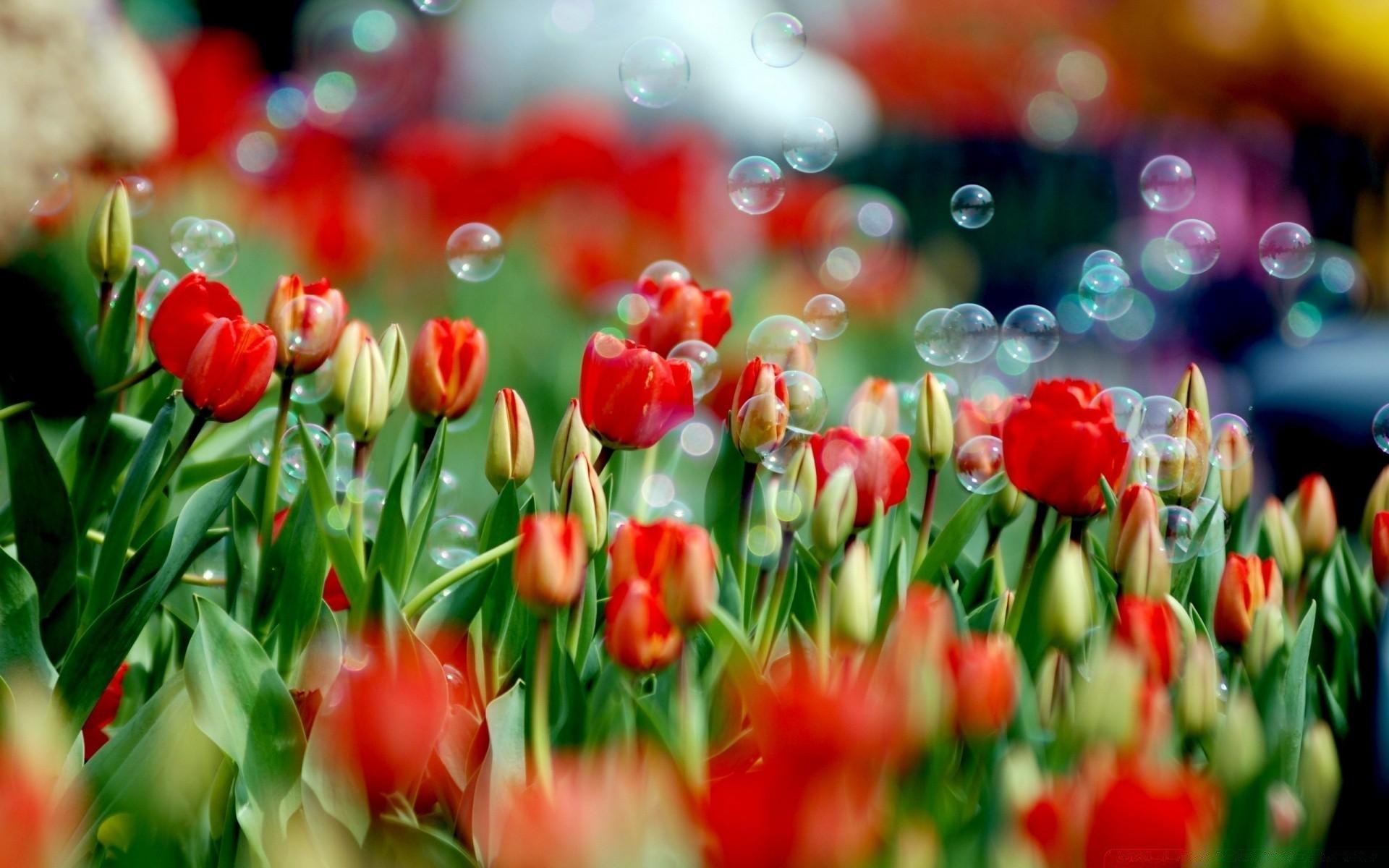 планки могут картинки весна 8 марта на рабочий стол использование хорошего