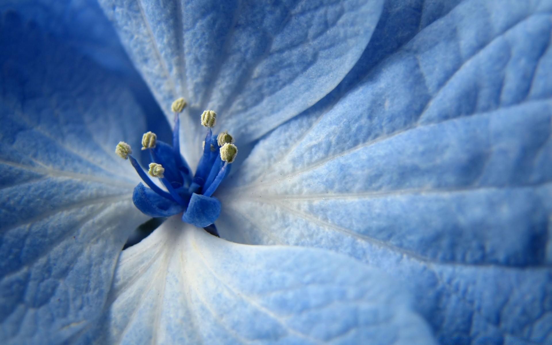 Картинки с синим цветом нежные