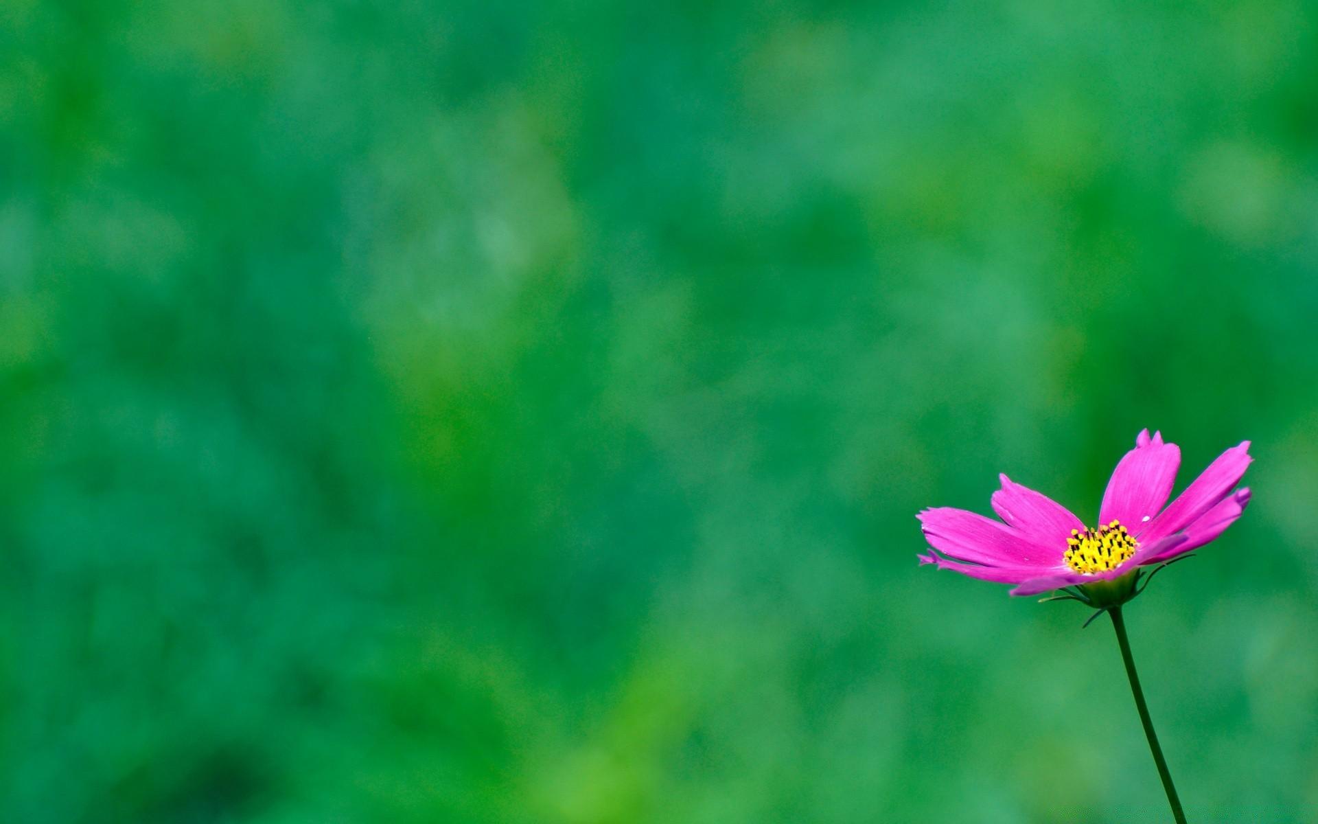 обои на зеленом фоне цветы онлайн каталог