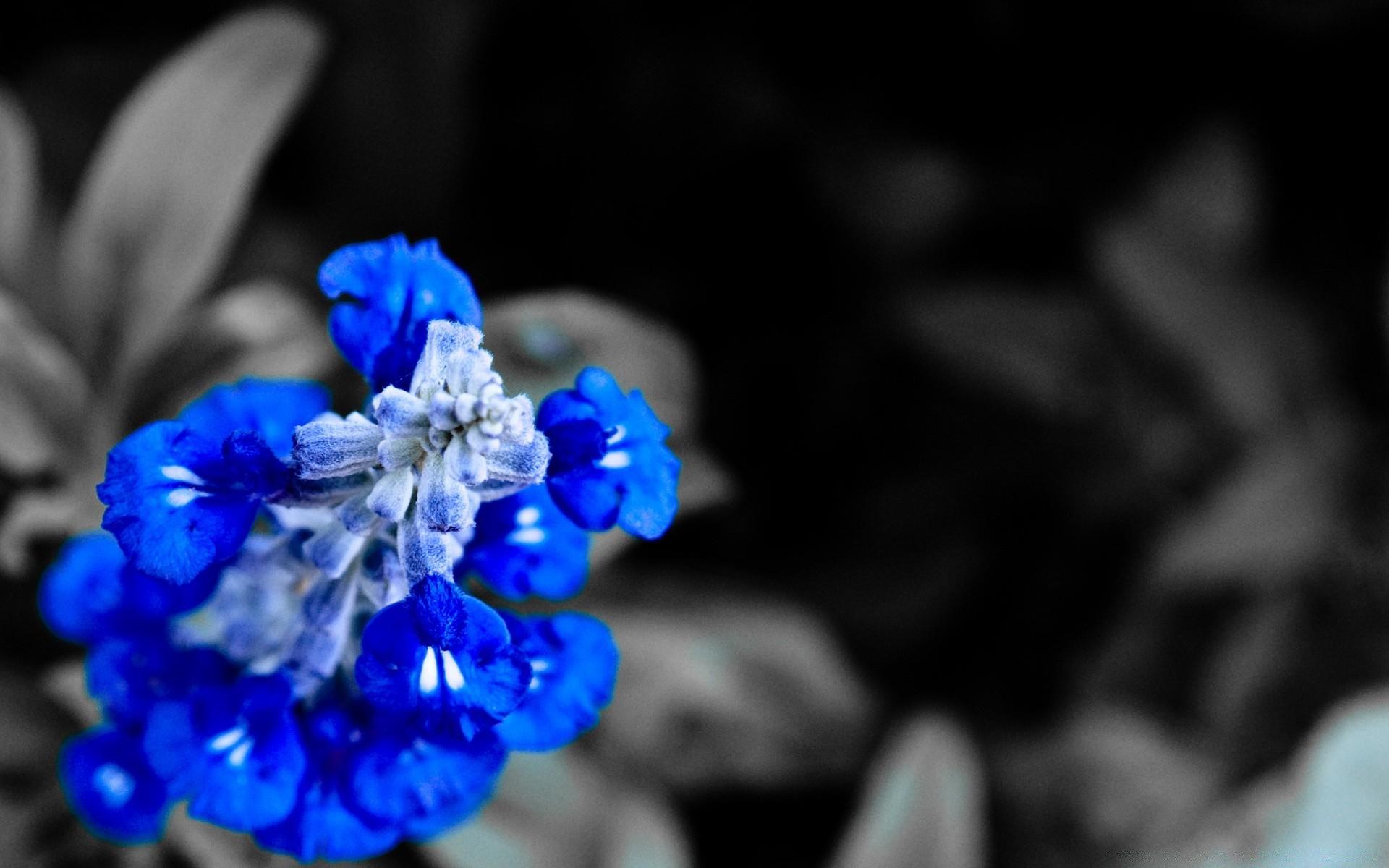 того, картинки синие цветы обои на телефон обусловлено тем