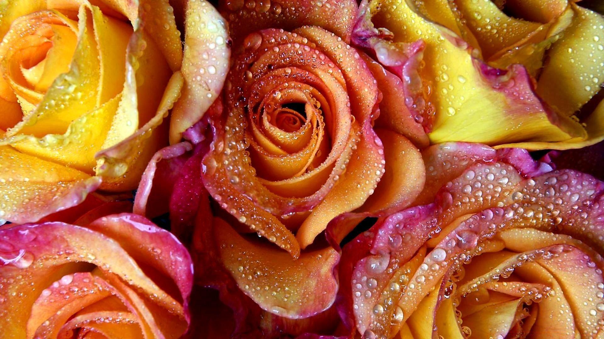 картинки на три экрана розы вот живете