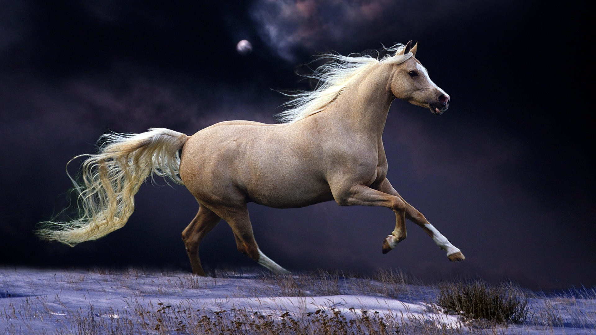 год лошади обои на рабочий стол № 528283 без смс