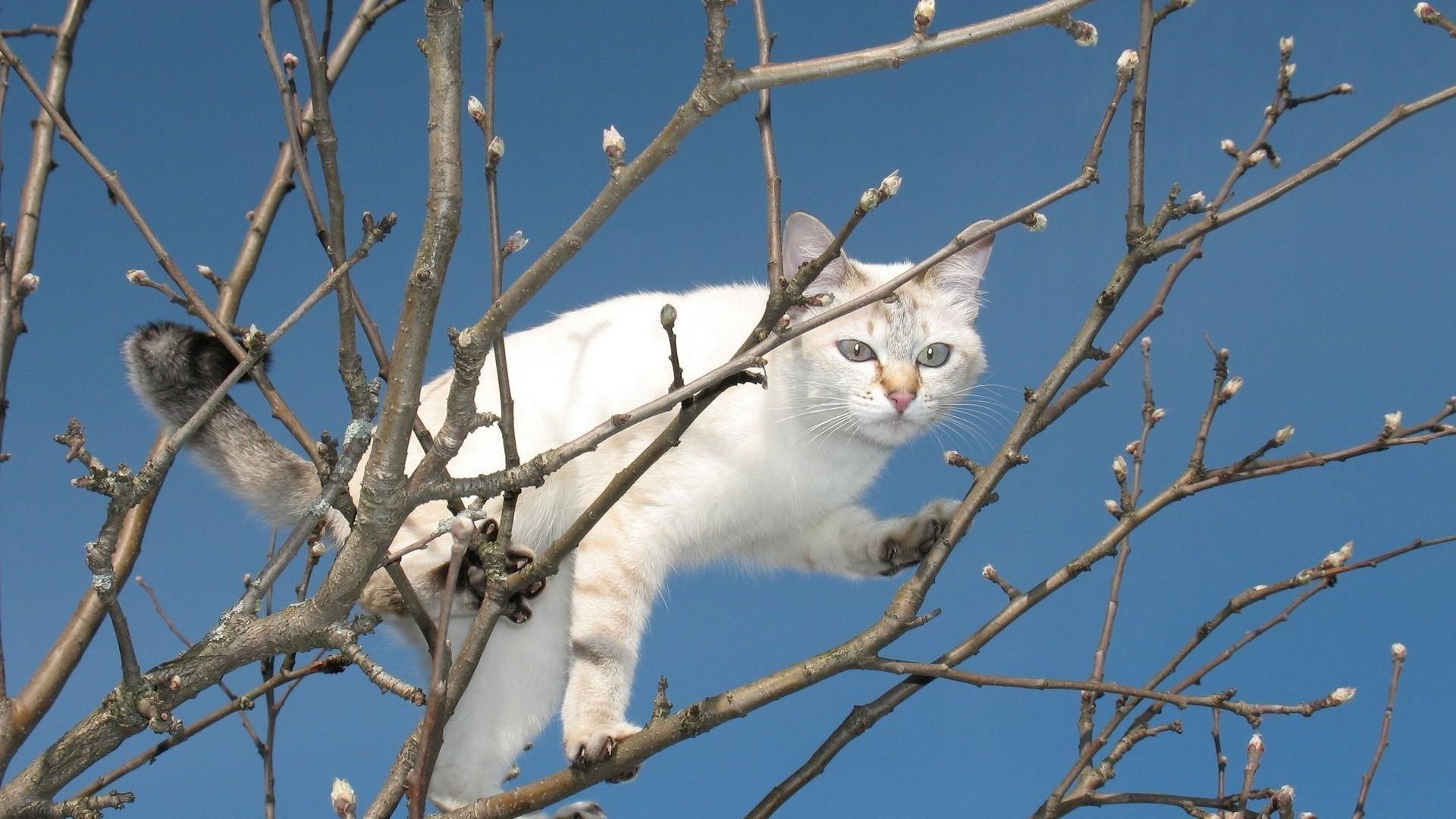 Кот на ветке  № 1118409 без смс