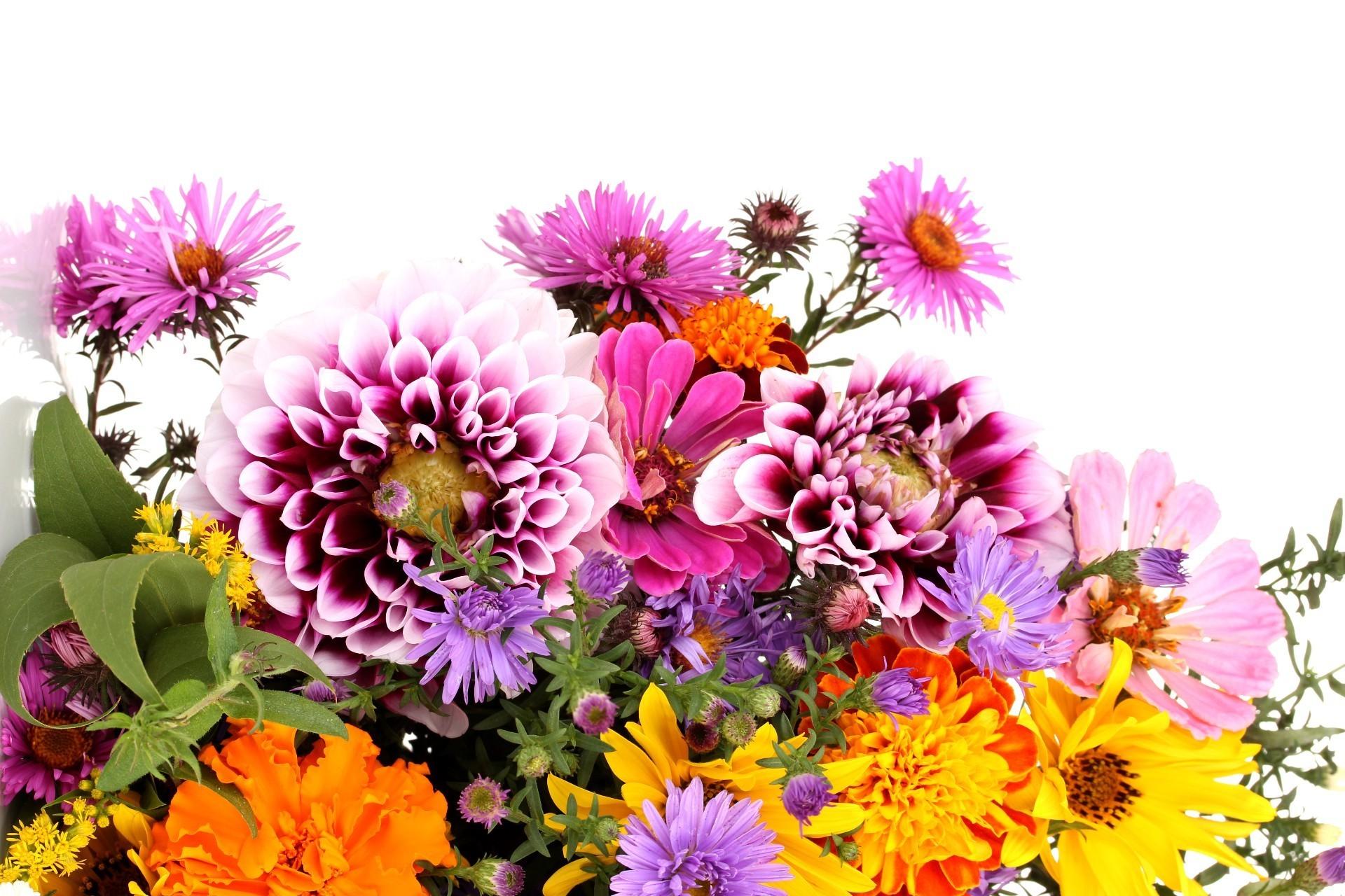 Прикольные аватаров, с днем рождения картинка хризантемы