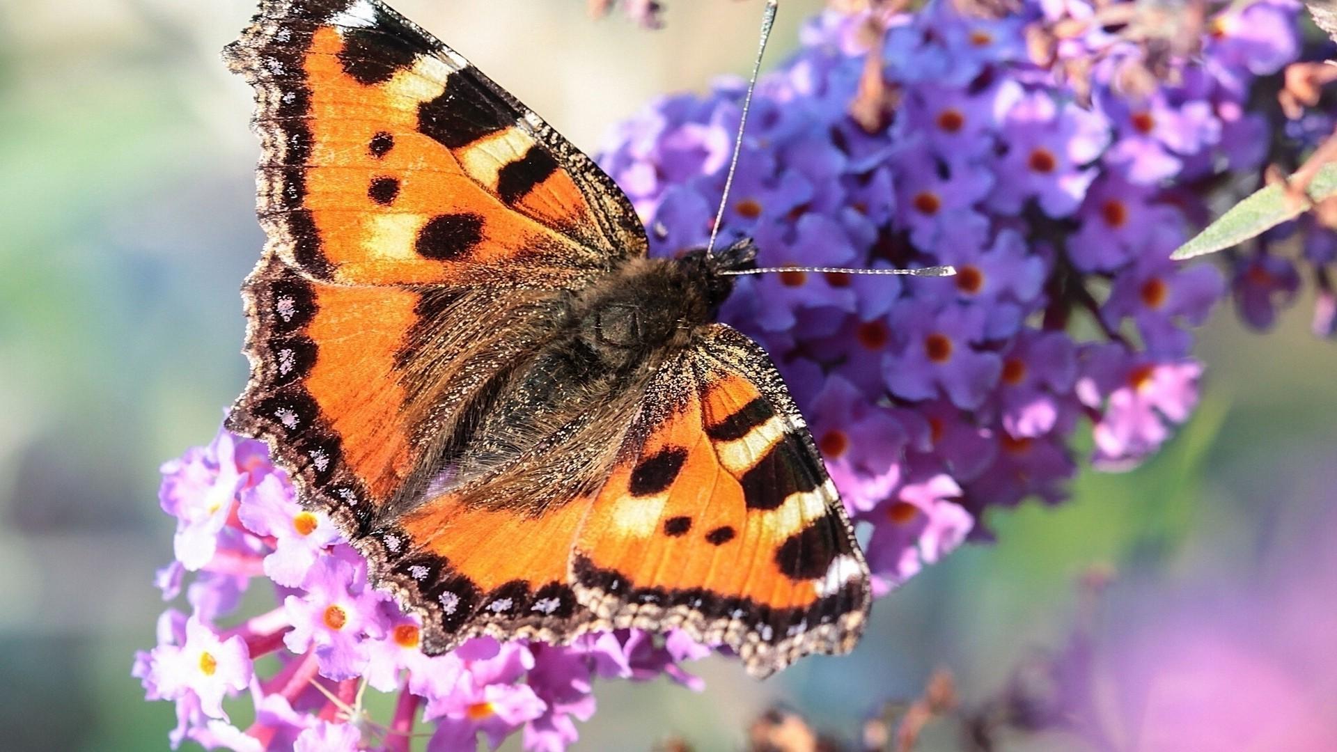 Открытка, бабочки открытки фото