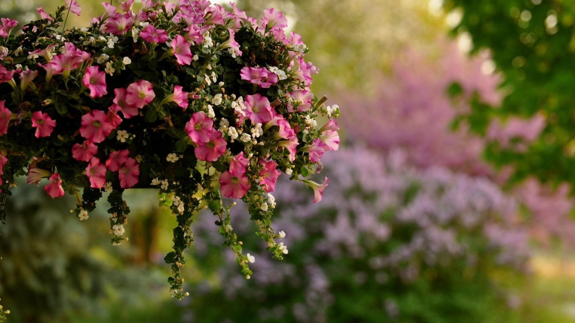 обои на рабочий стол цветы розы лилии гвоздики колокольчики