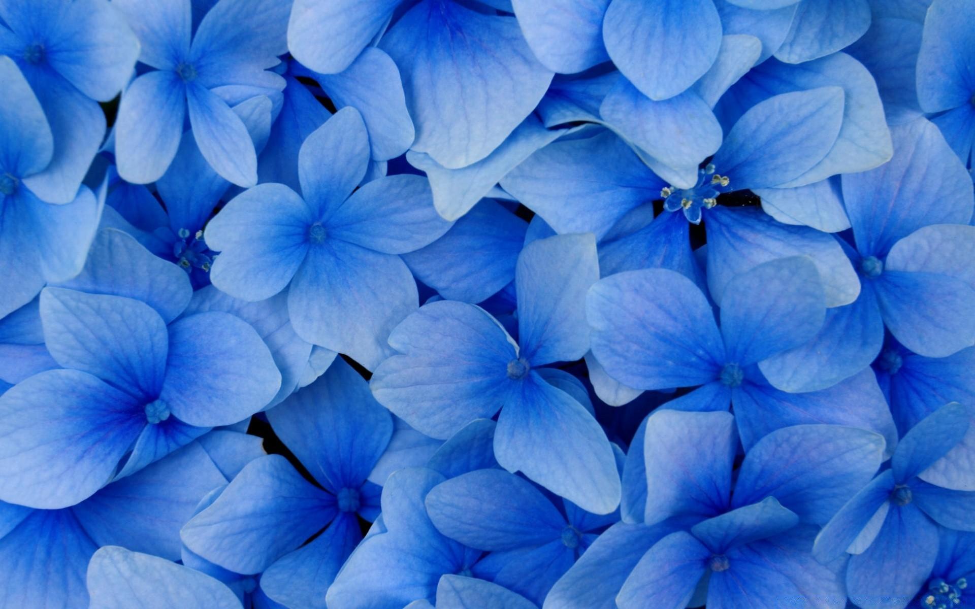 Самому, картинки синего цвета на телефон