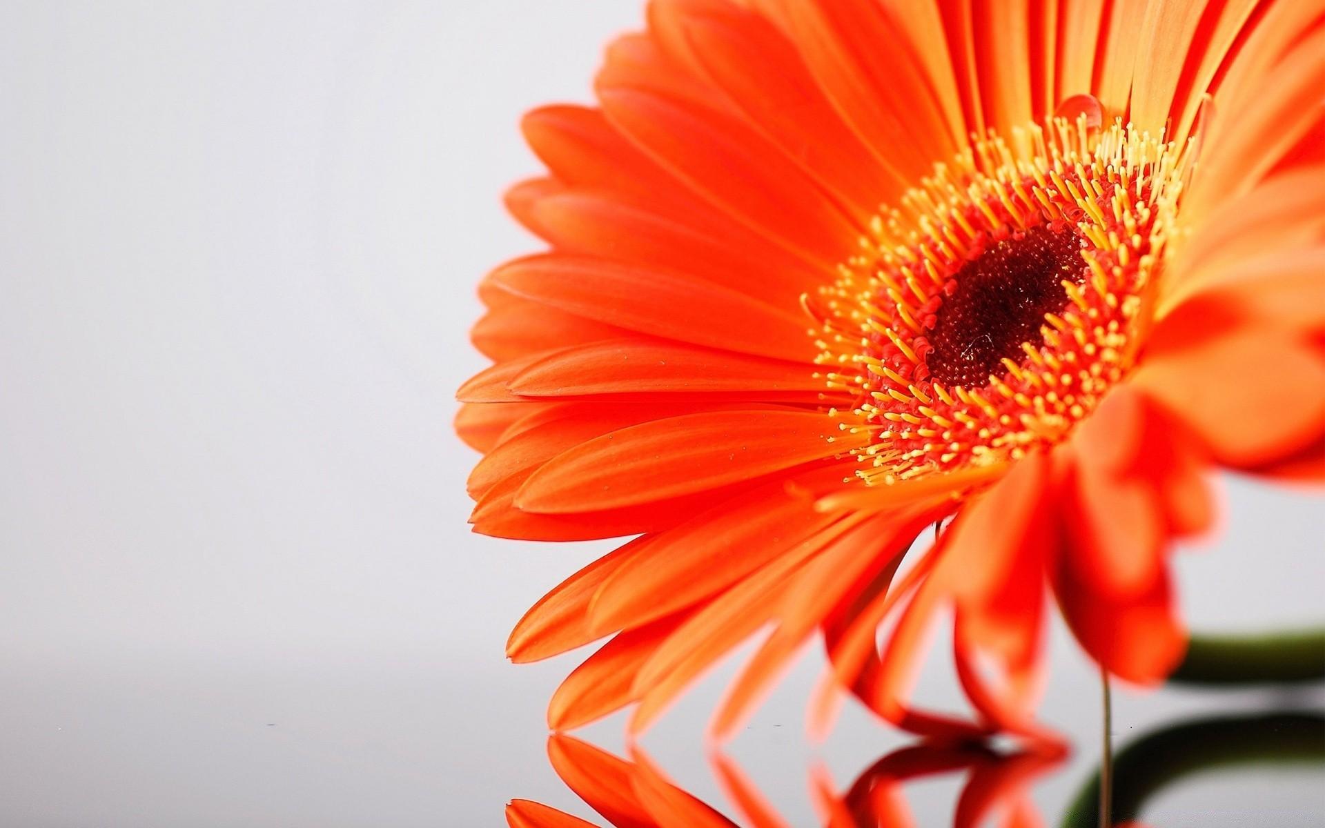 Картинки оранжевых, отправить открытки