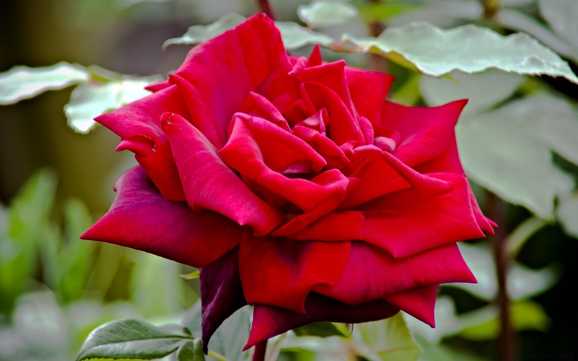 липучках находка королевская роза картинка сторона банкноты