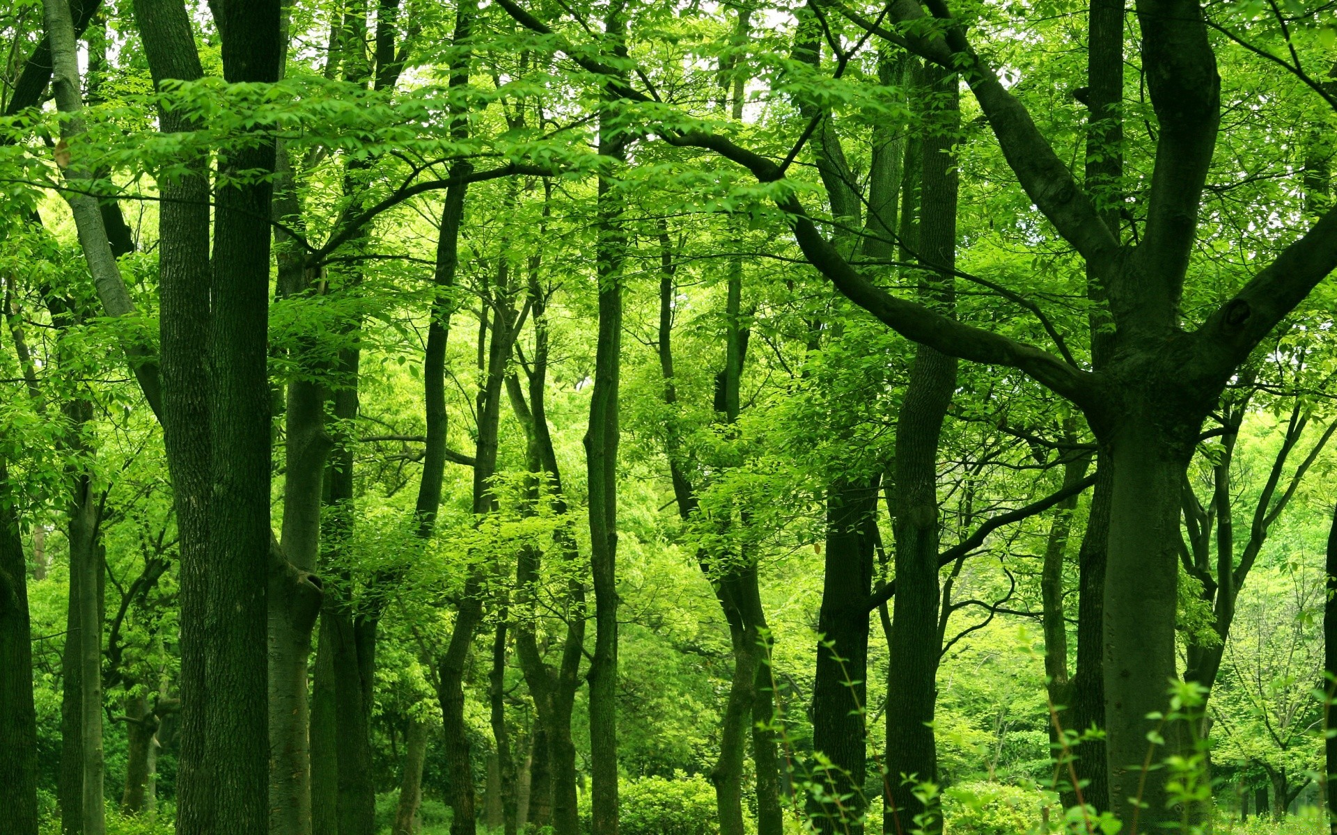 green forest hindu personals Meet green forest senior singles at loveawake 100% free online dating site whatever your age we can help you meet mature men and women from green forest, arkansas, united states no tricks and hidden charges browse green forest personals of men and women without payment.