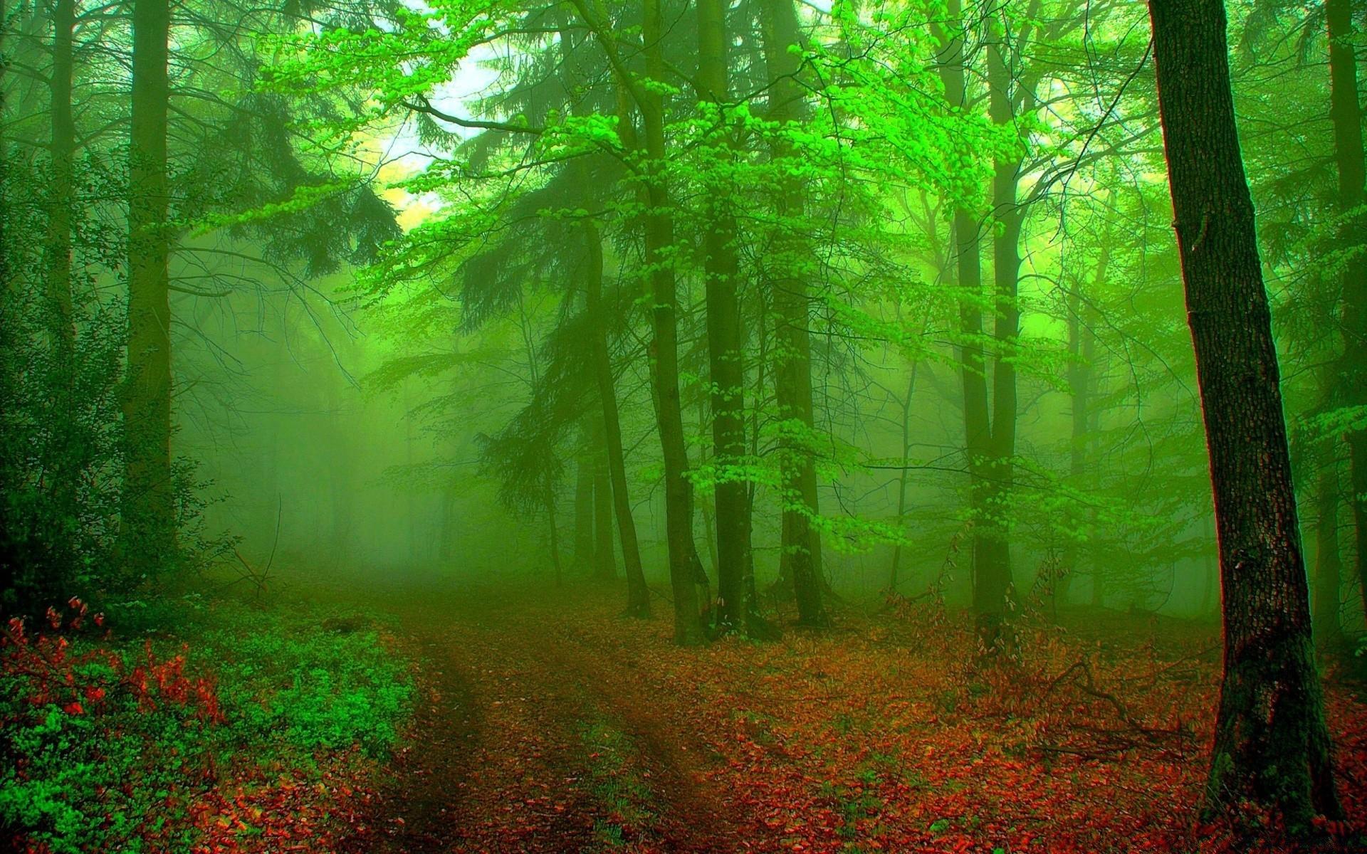 картинки на фон природа лес поговорили