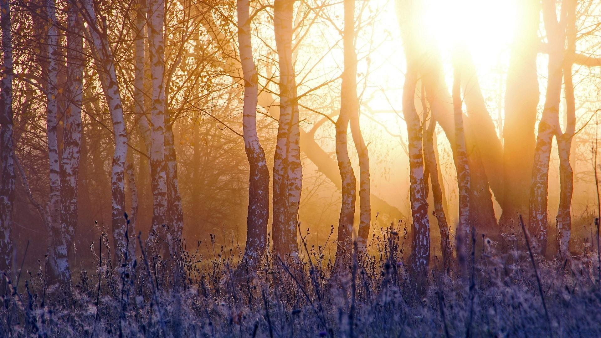 Картинка на рабочий стол солнце и природа пробуждается ото сна
