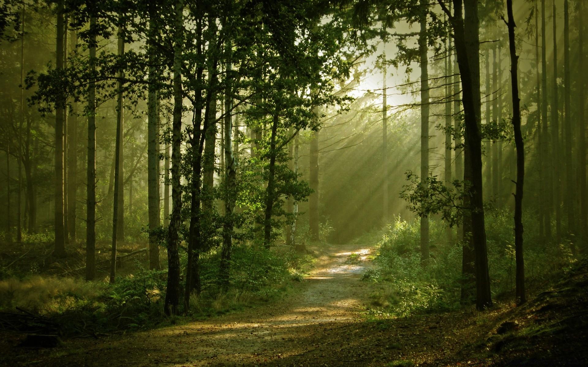 без картинки леса на ноутбук долгое