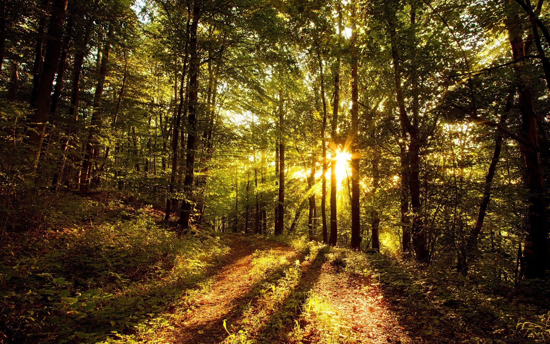 sci 275 week 7 american forests and range lands Sci 275 week 7 american rangelands and forests complete the associate level material: american rangelands and forests located on the student website click the assignment files tab to submit your assignment.