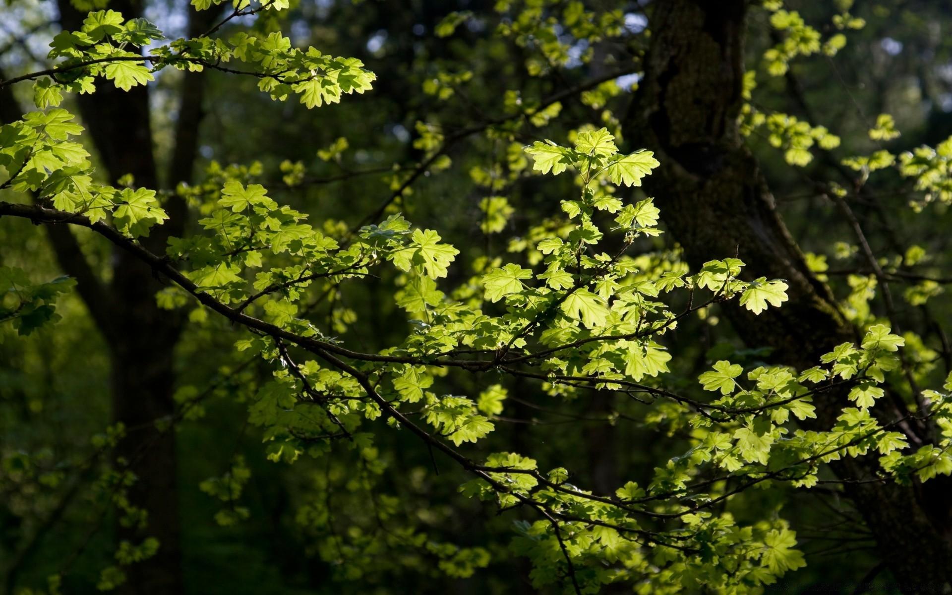Картинка ветки в лесу