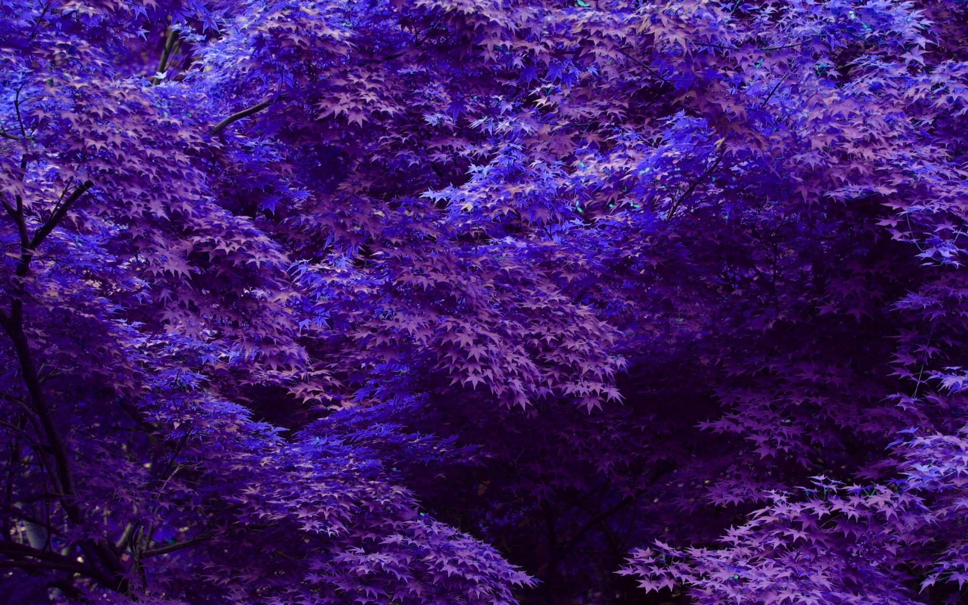Картинки фиолетового тона
