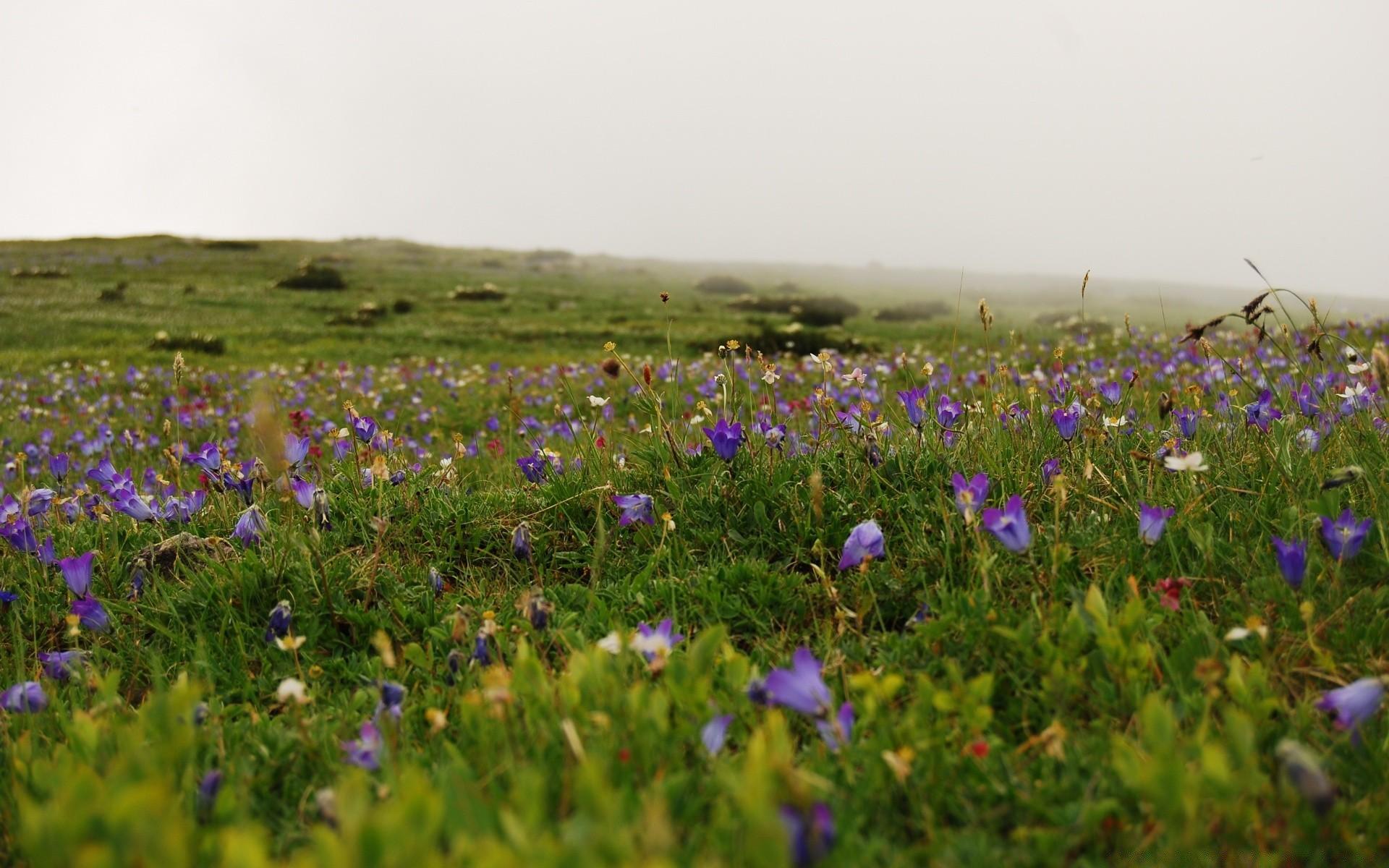 Полевые цветы весенние север казахстана фото любой