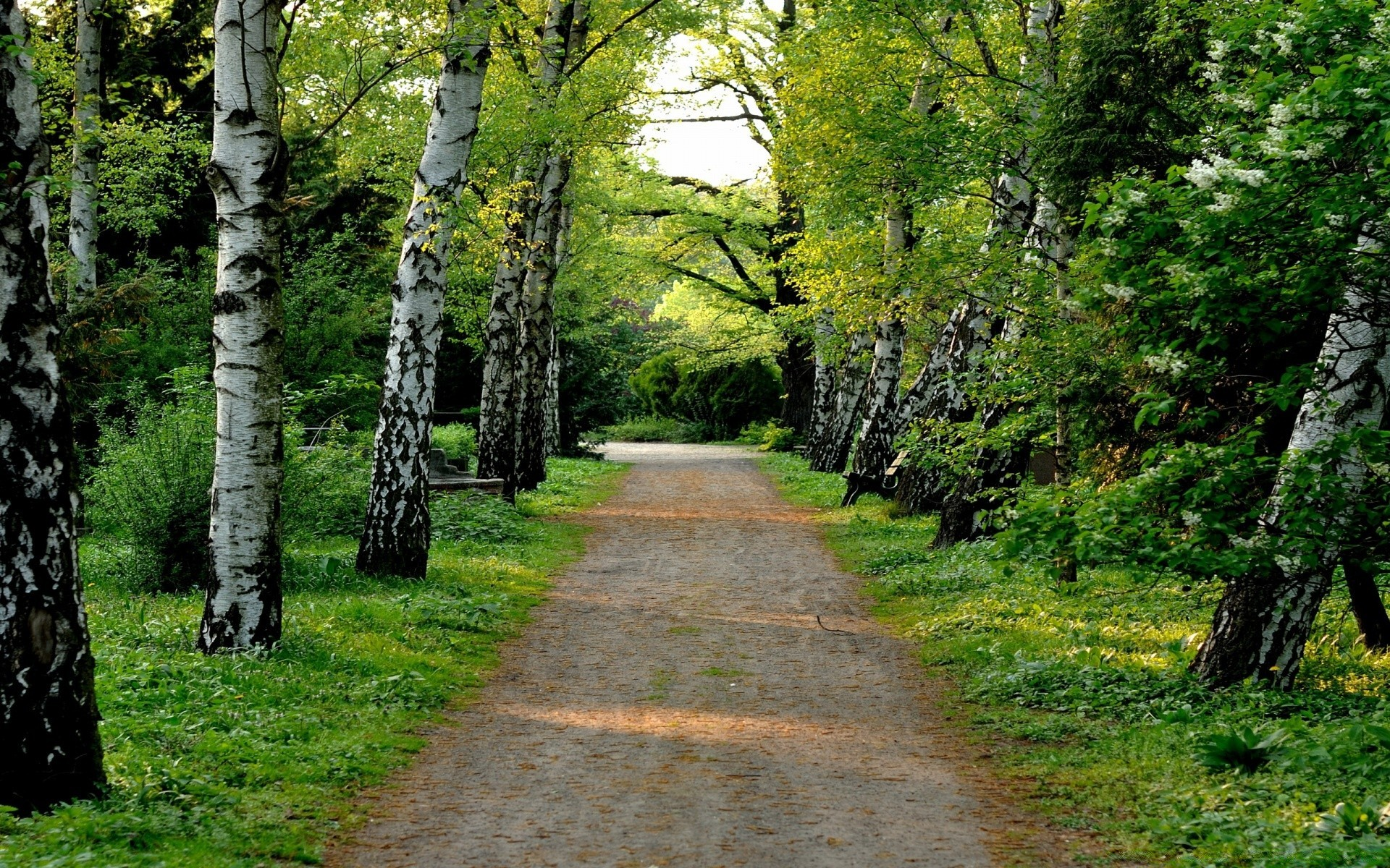 деревья парк осень роща  № 3186142  скачать