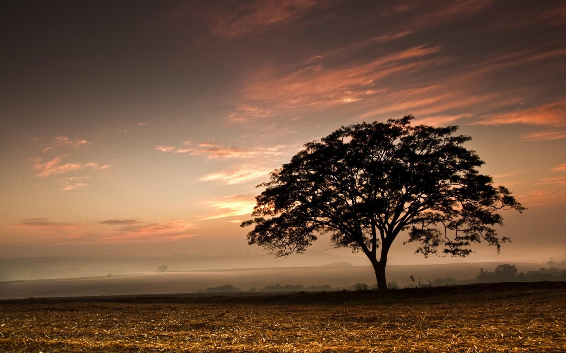 Деревенский гламур фото на фоне ковра пресняков вегетарианец