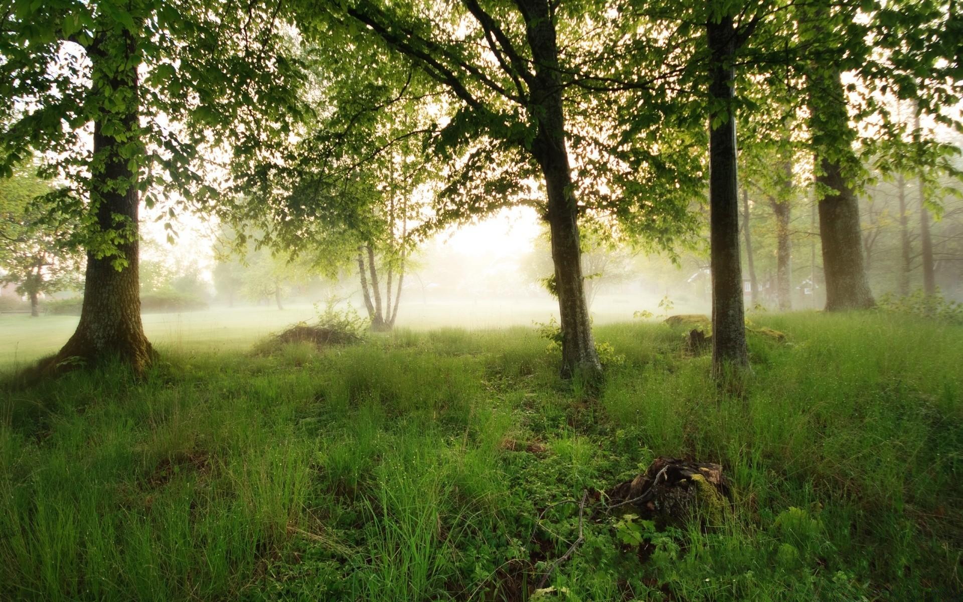 фотообои утро в весеннем лесу необходимо