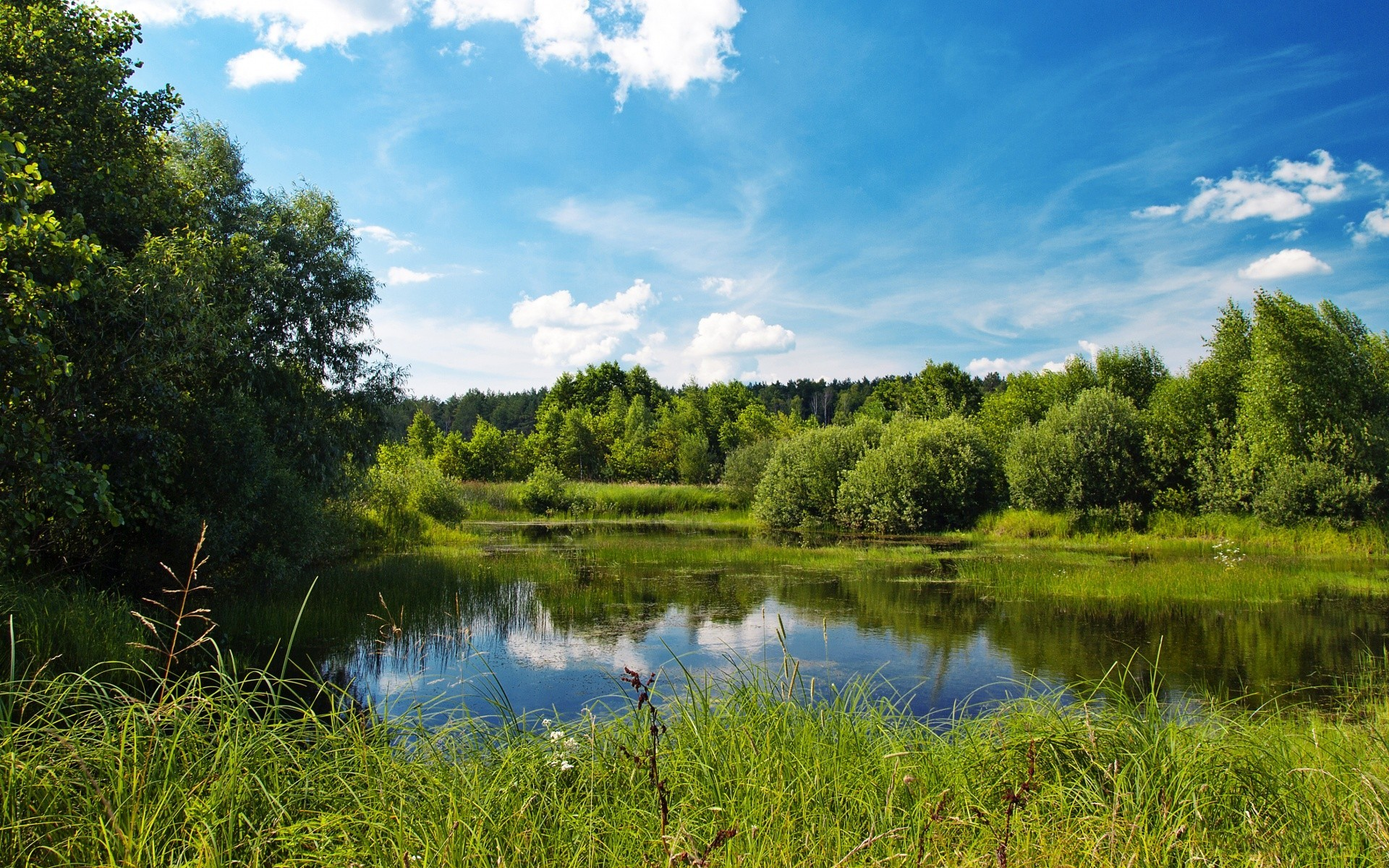 Папе, природа летом картинки красивые на рабочий стол