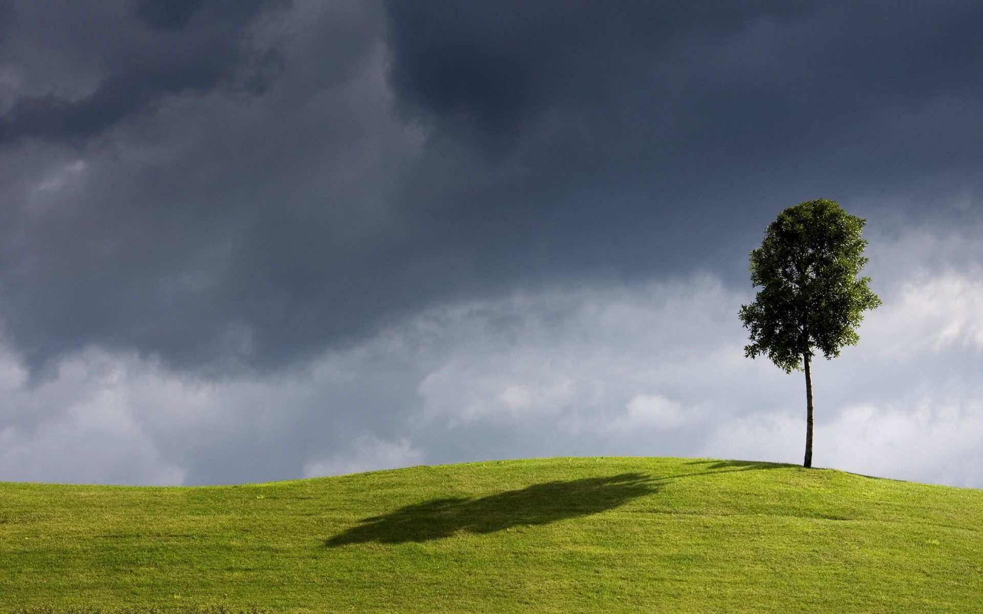 картинки дерево на холме полоски