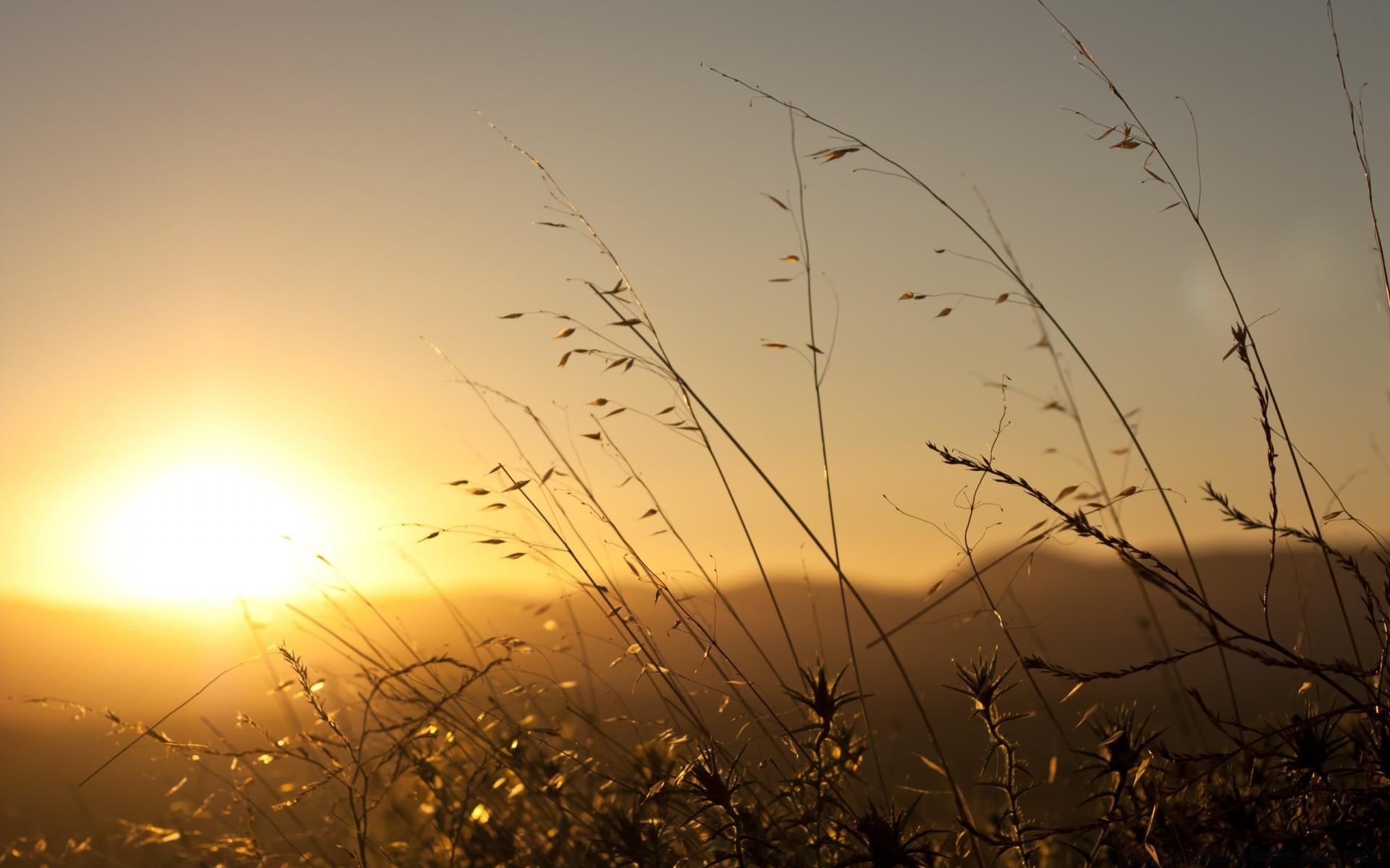плантация зелень закат поле скачать