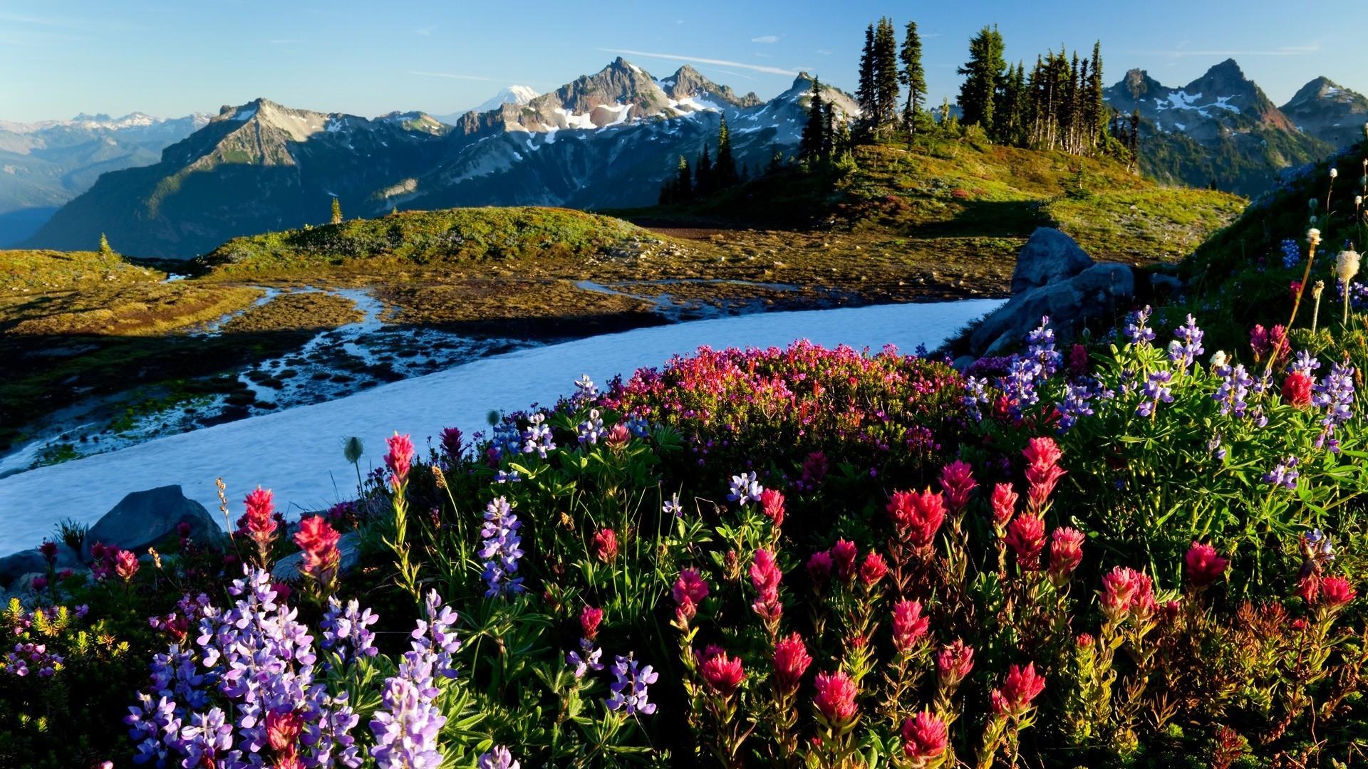 Красивые картинки природы с цветами шикарными