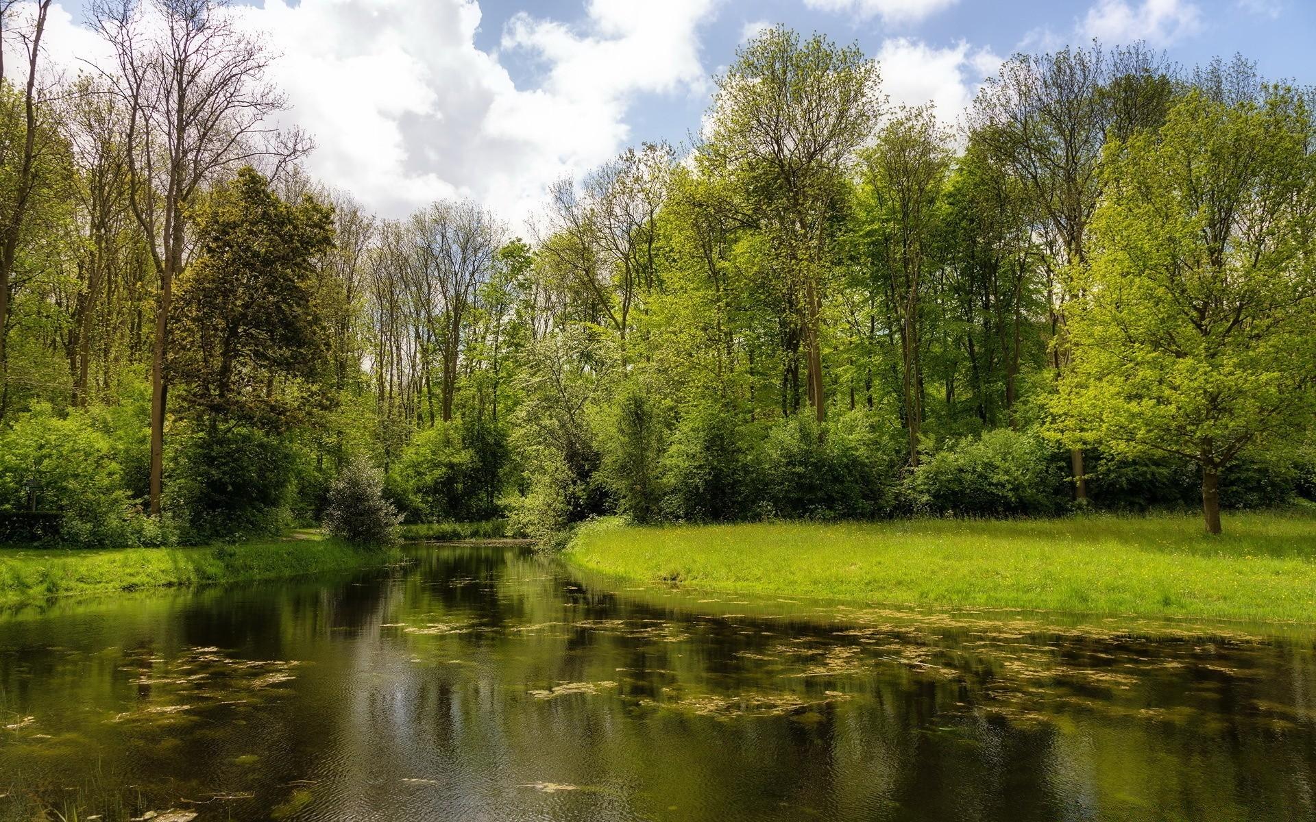 природа деревья небо река дома  № 571439 бесплатно