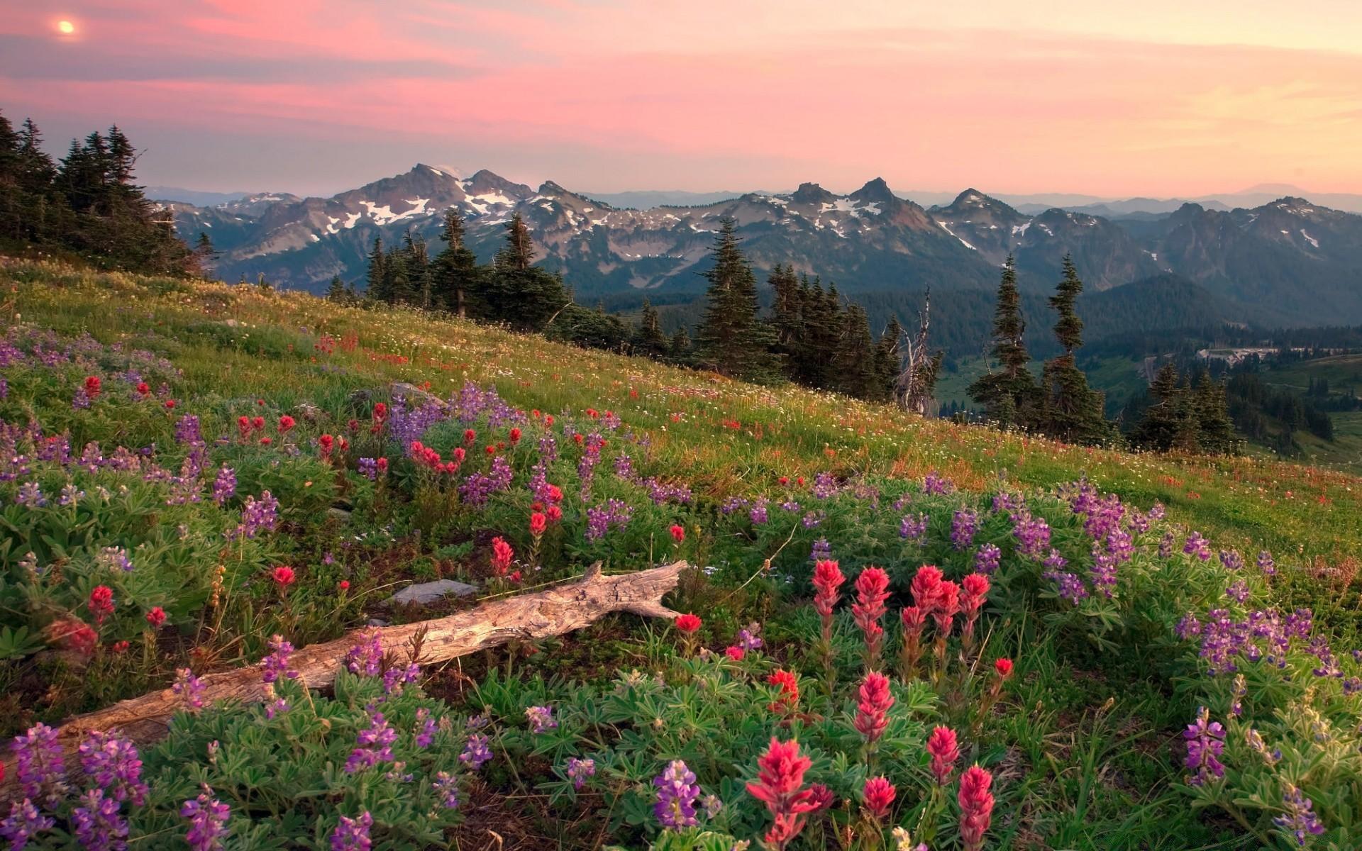 цветы поляна горы холм небо  № 3836090 без смс