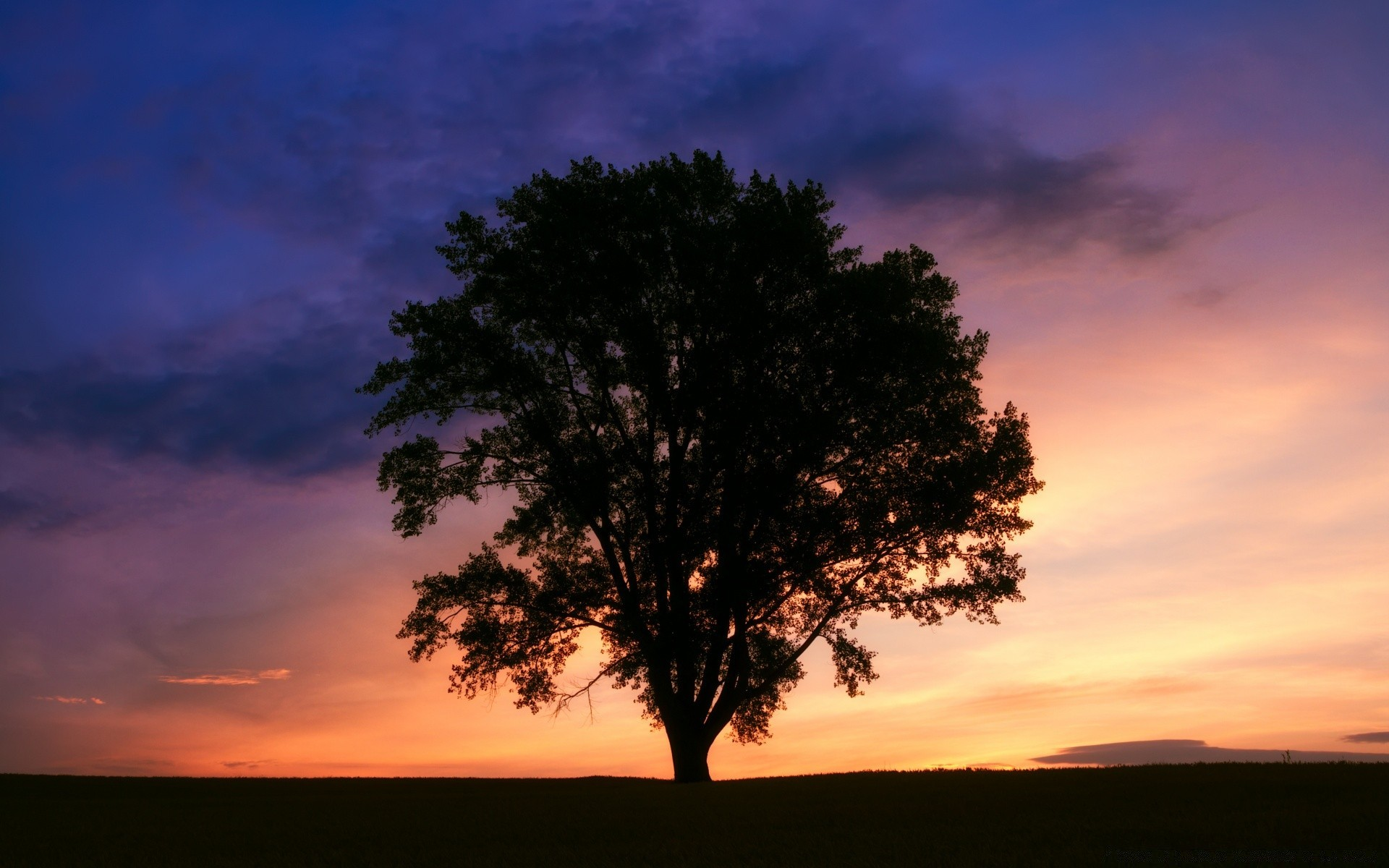 Дерево на закате картинка