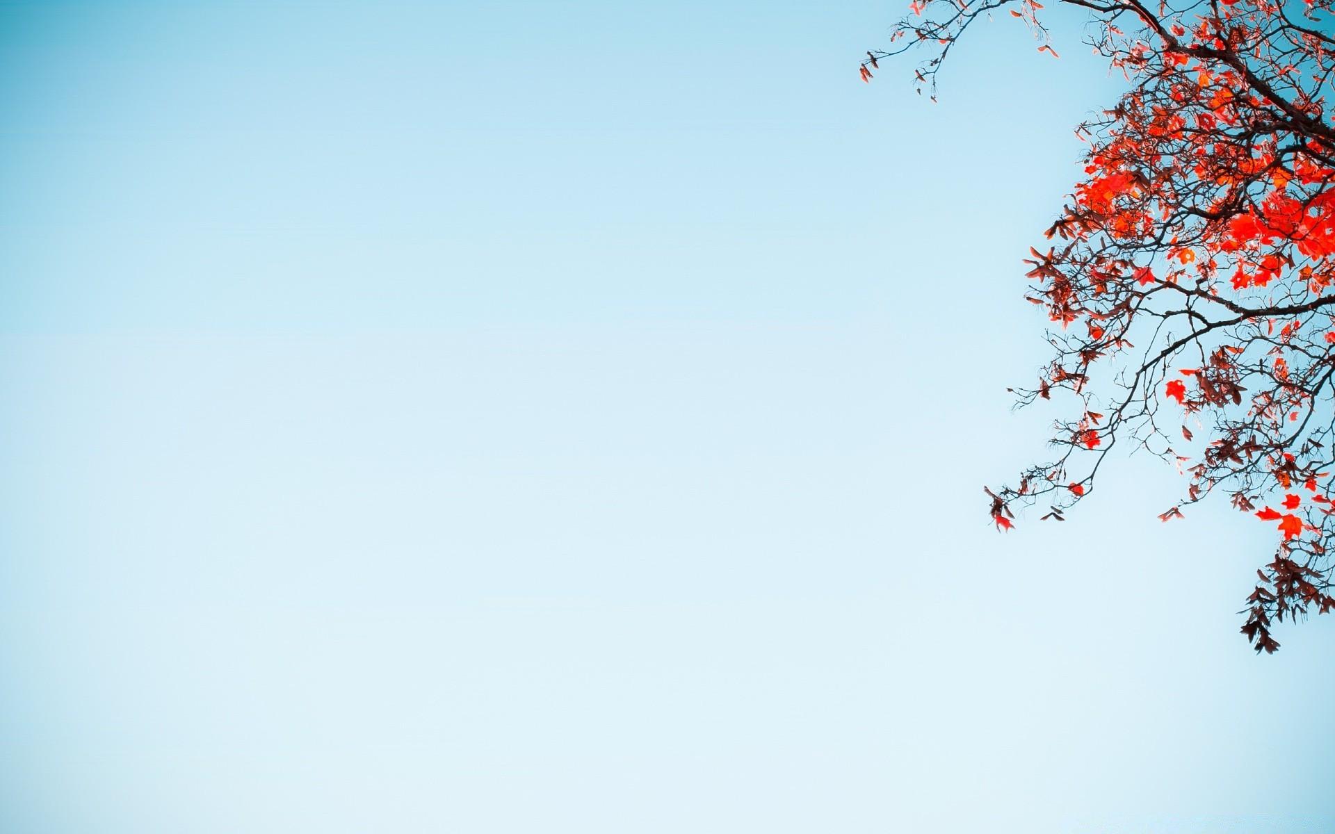 дворец картинка весна минимализм яркий букет кустовых