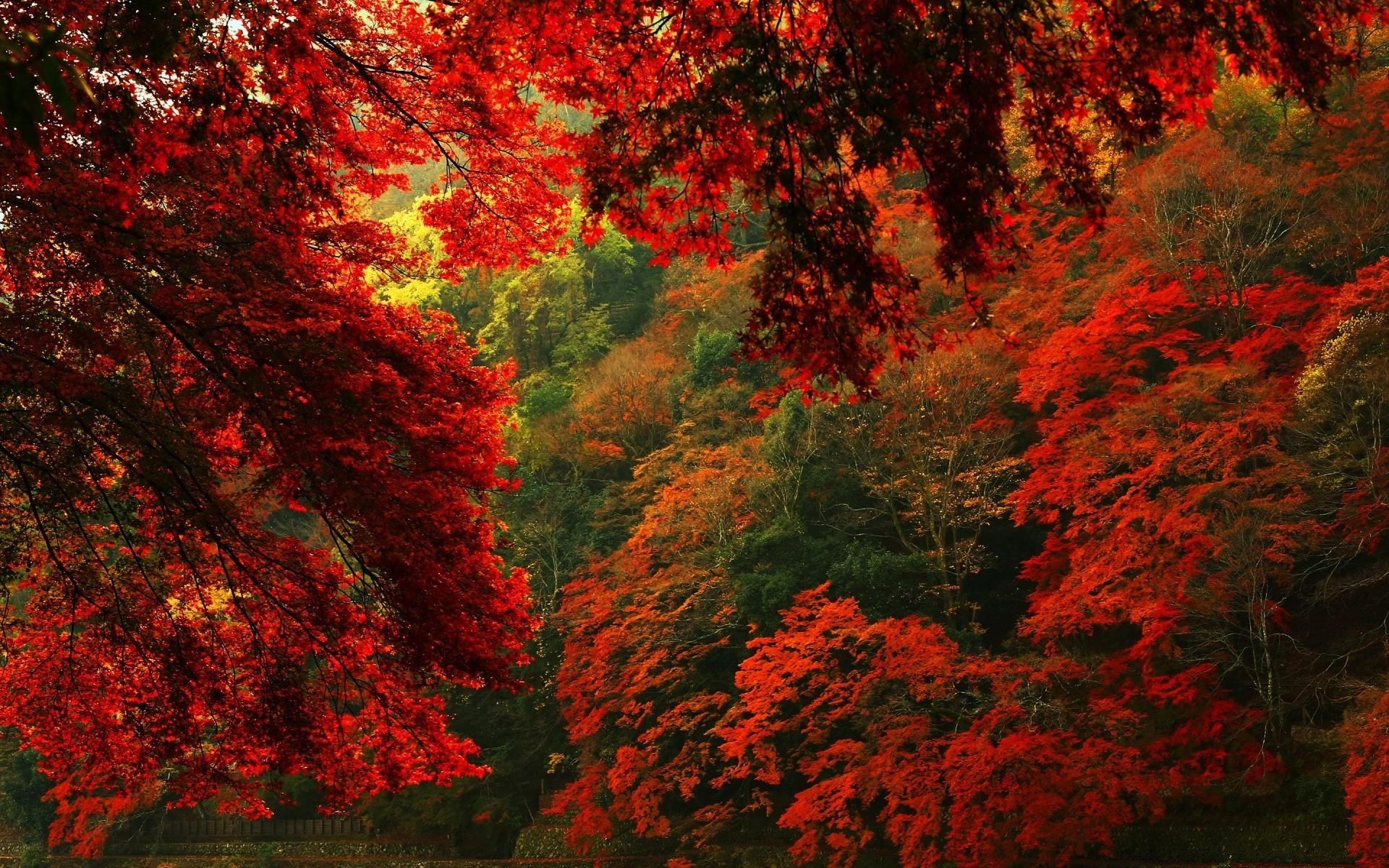Красивая осень картинки обои на рабочий стол