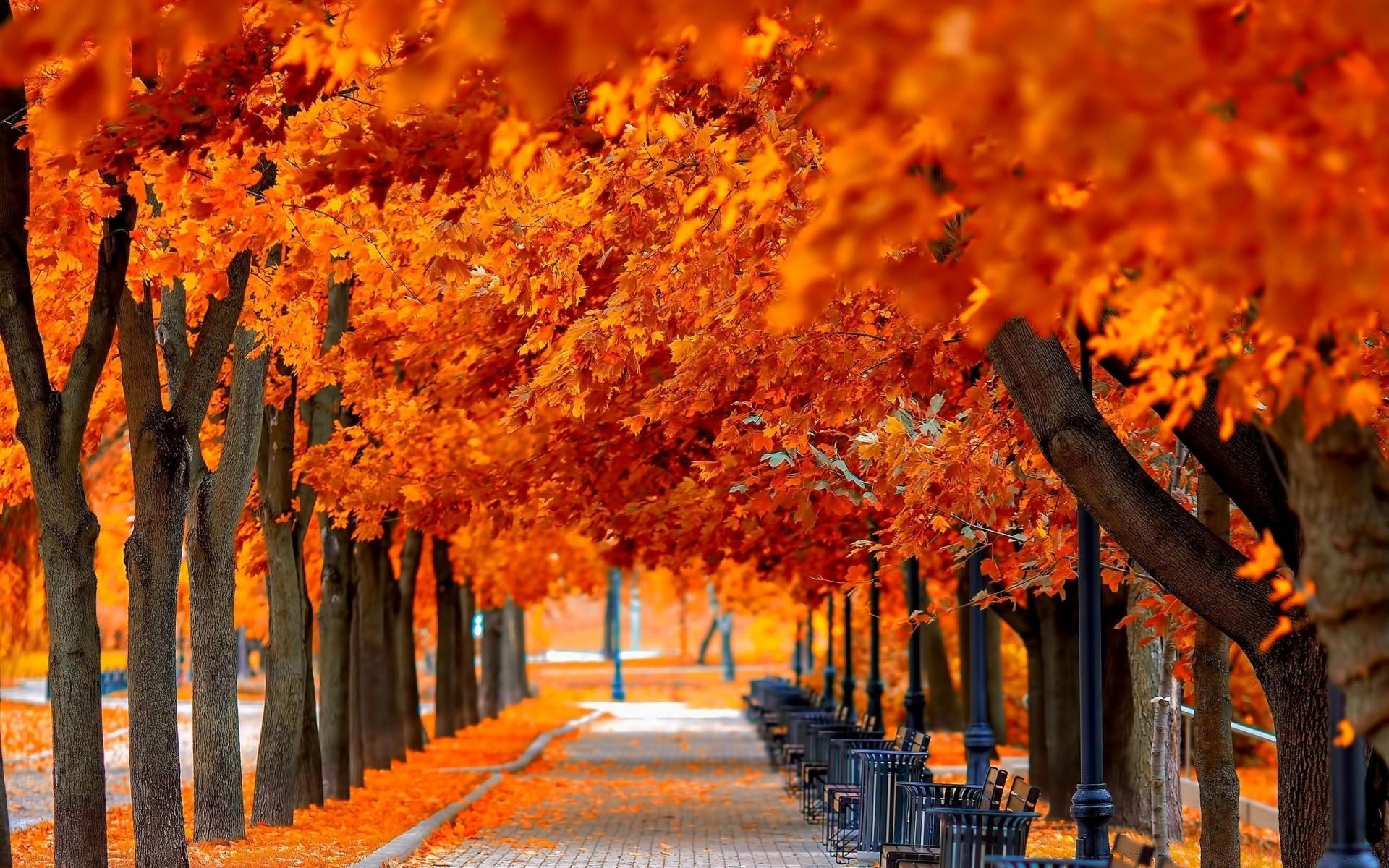 Скоро отпуск, все картинки про осень