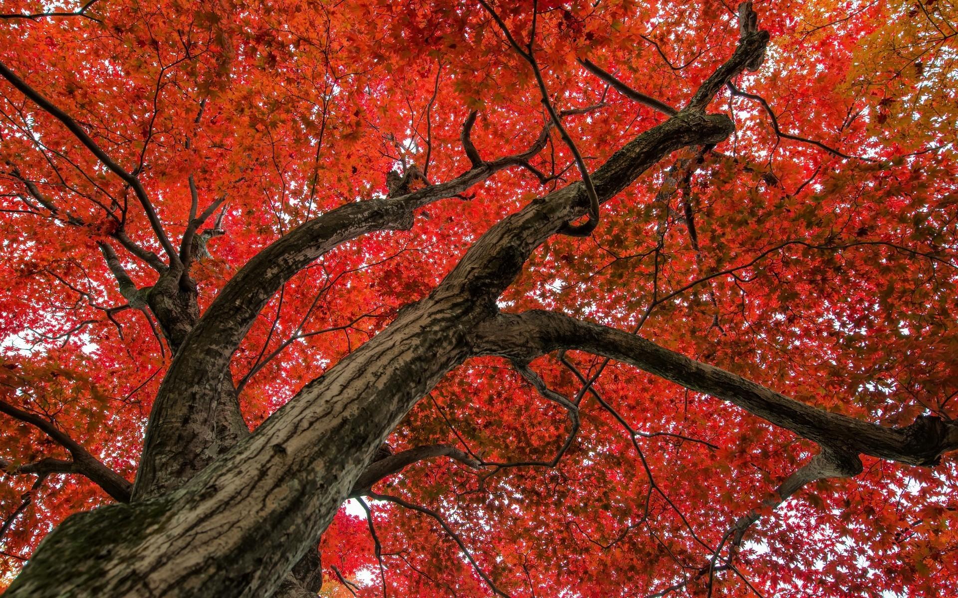 стандартный фото красной осени разнообразию климата здесь