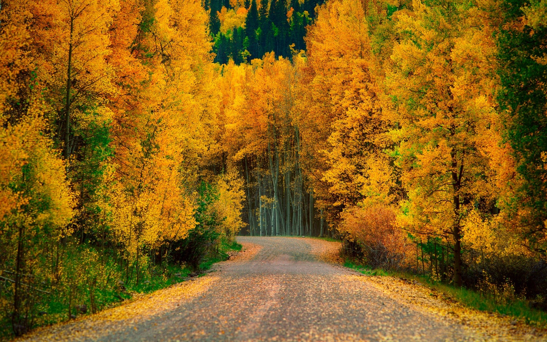 Картинки осенний лес на рабочий стол хорошее качество