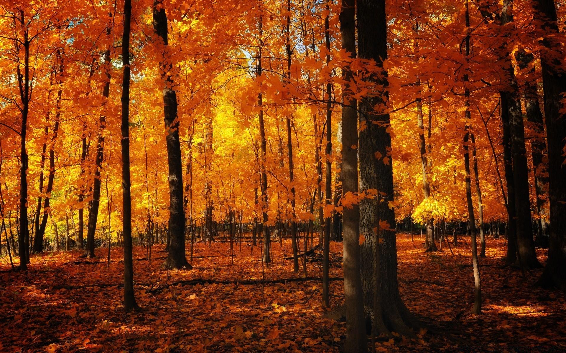 Осенний лес открытки, картинки