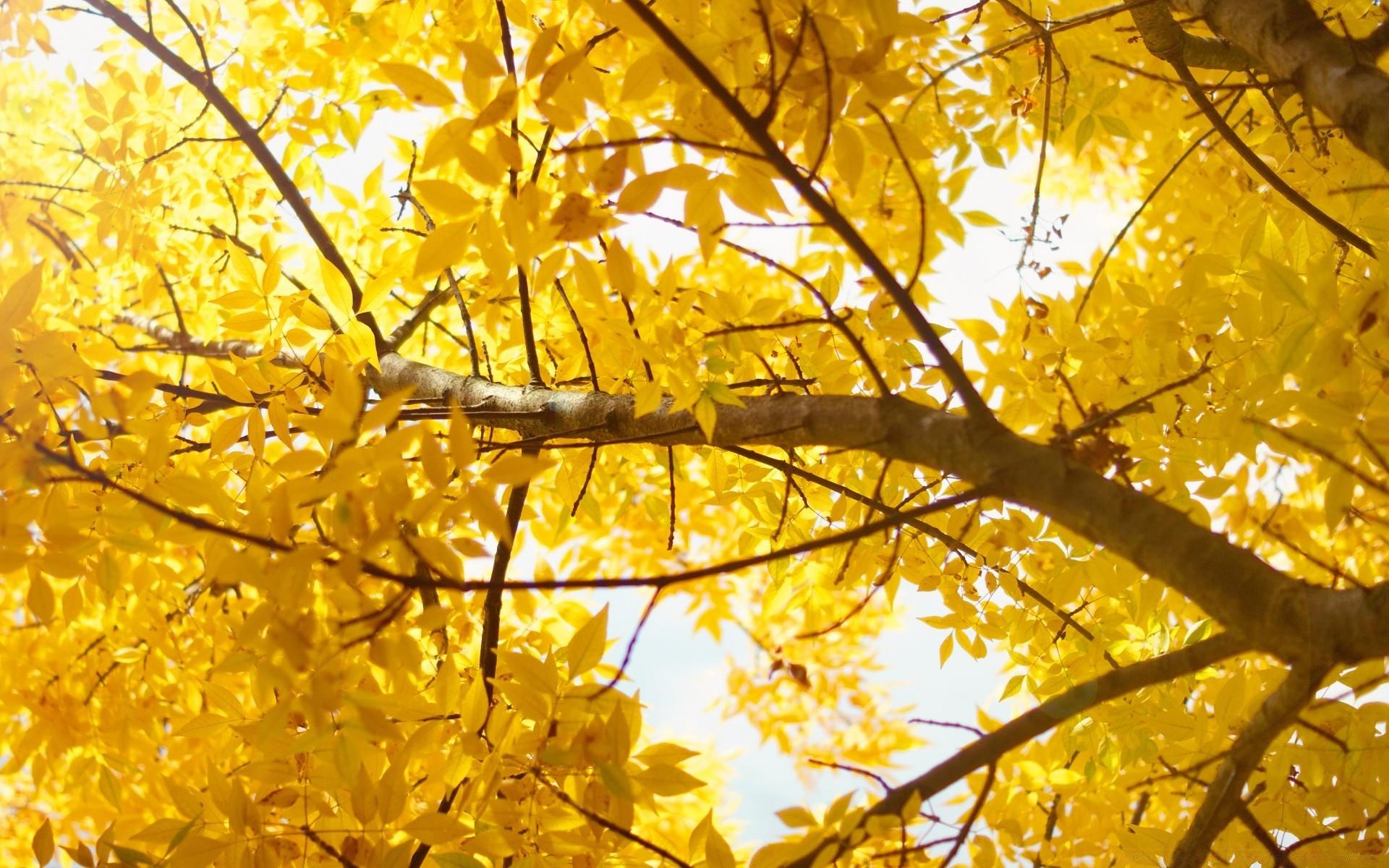 деревья листва осень солнце  № 3191771 без смс