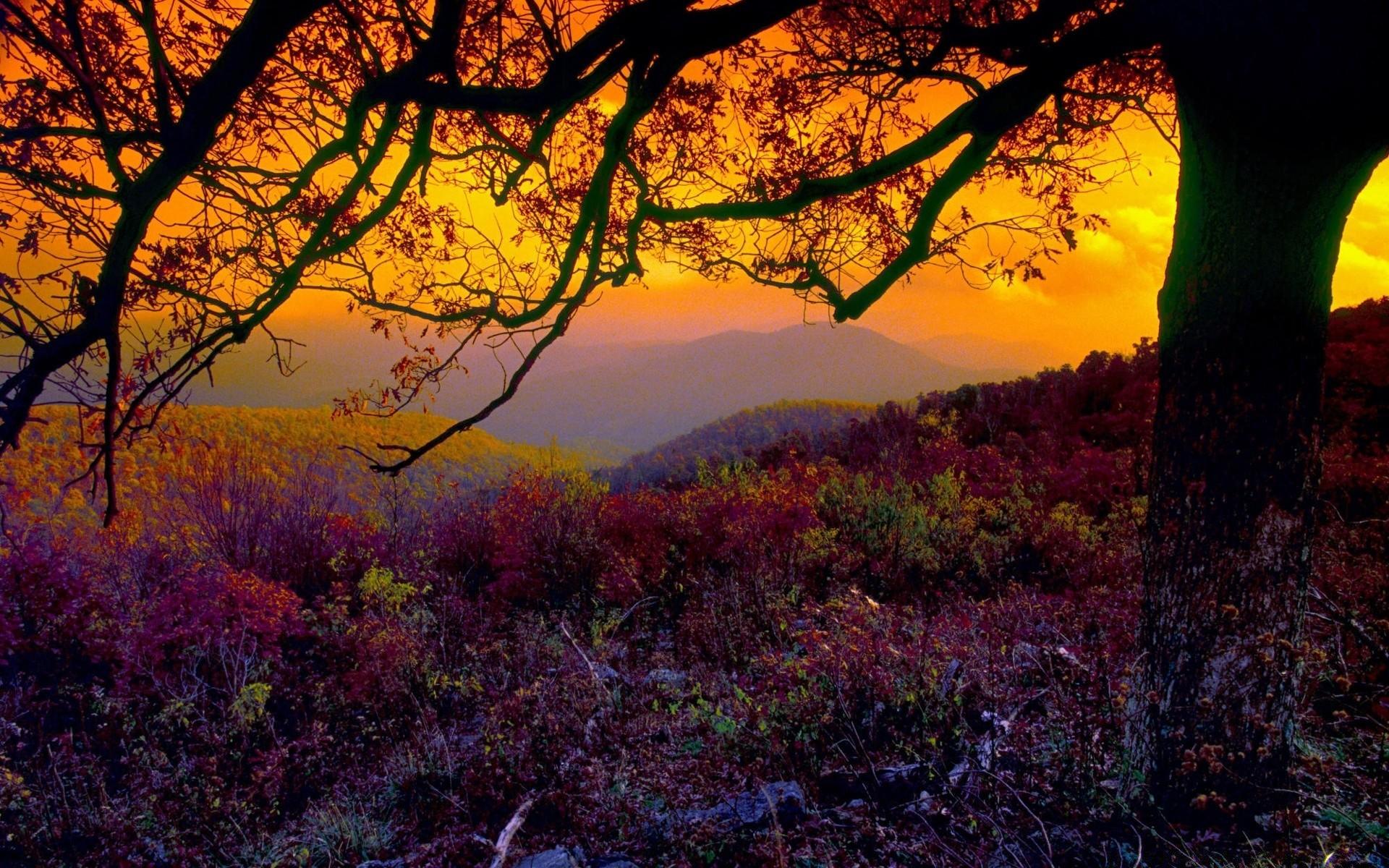 пара закат парк осень без смс