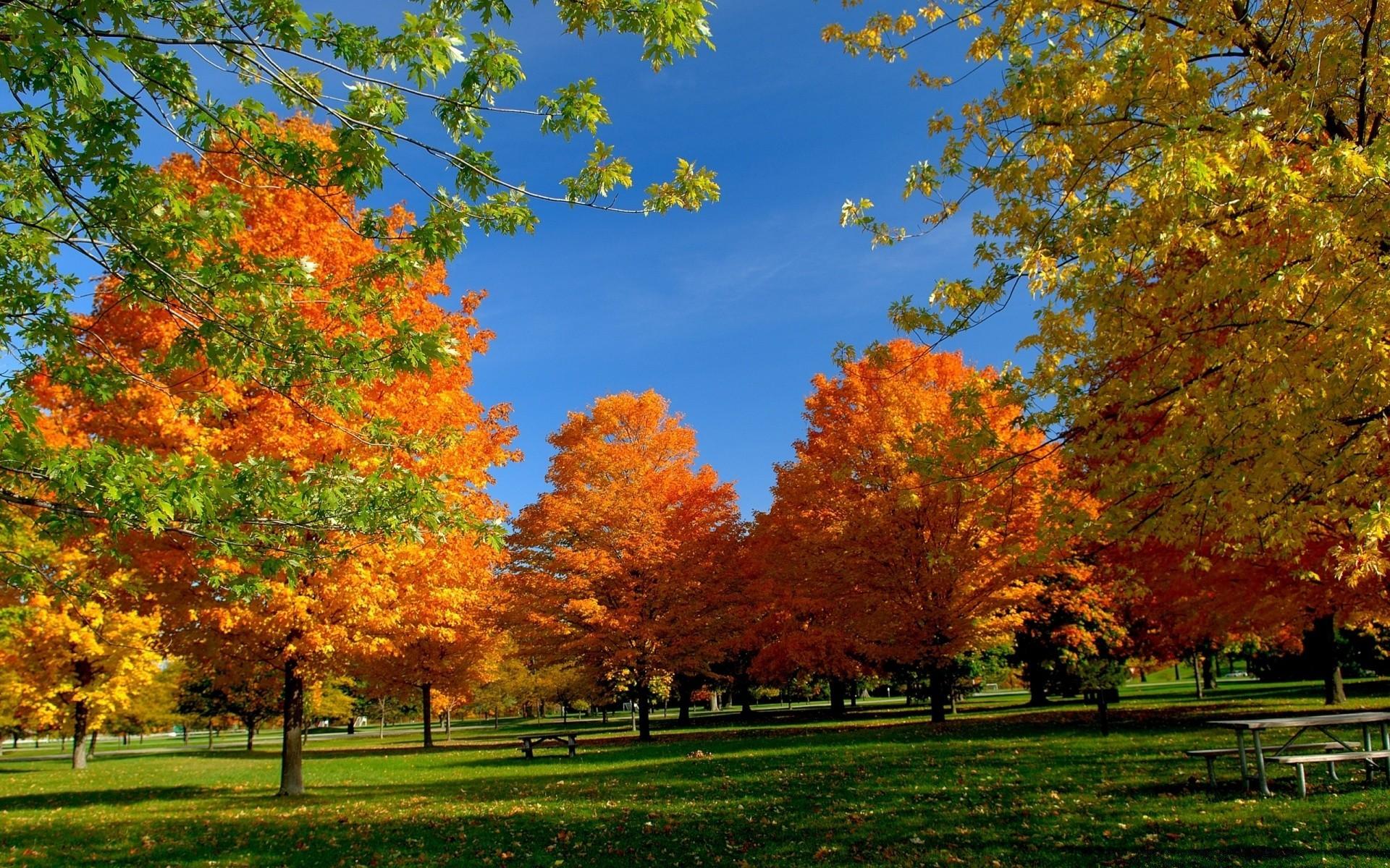 Парк осень солнце бесплатно