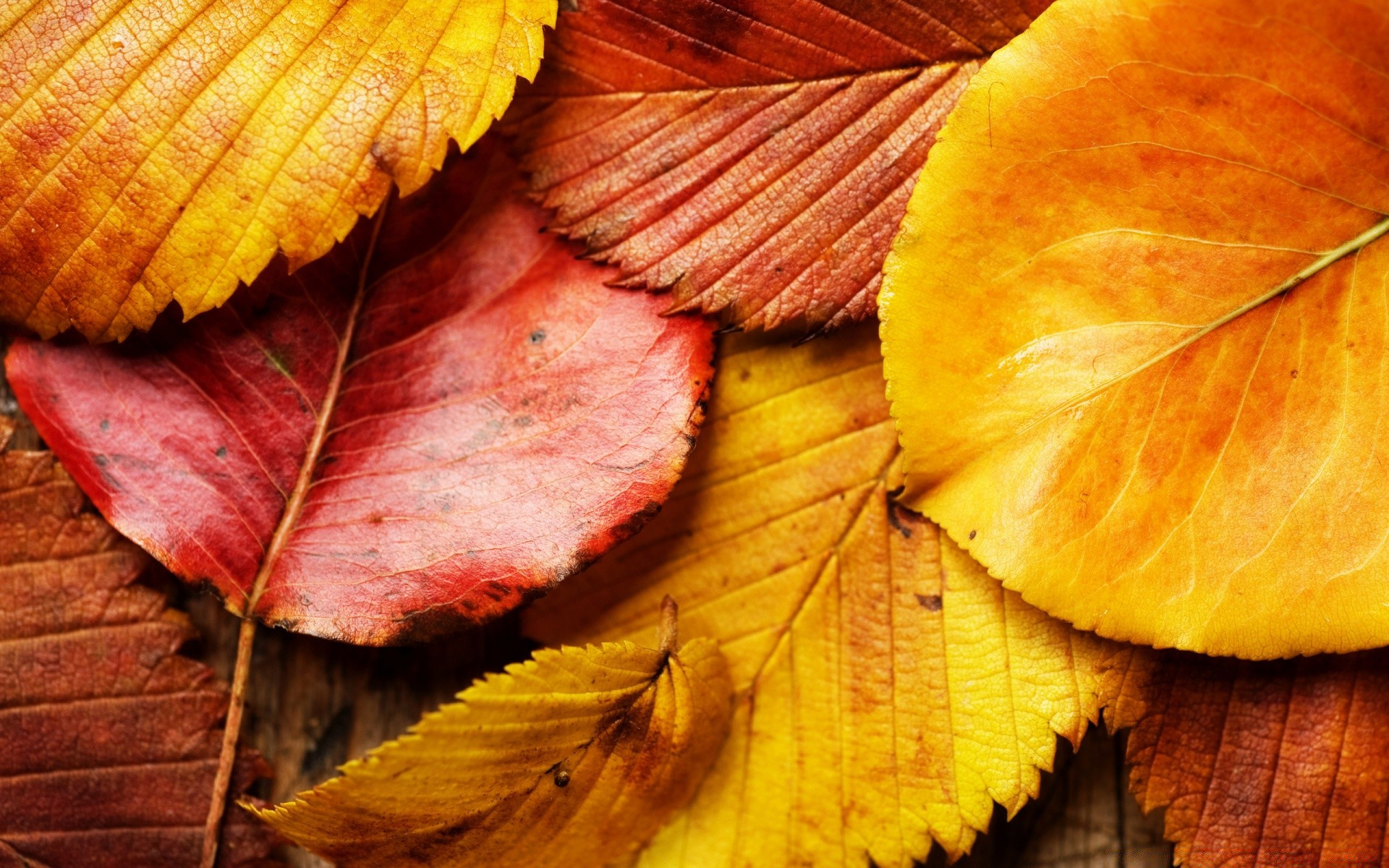 красивые картинки на телефон осень на доске беличьих