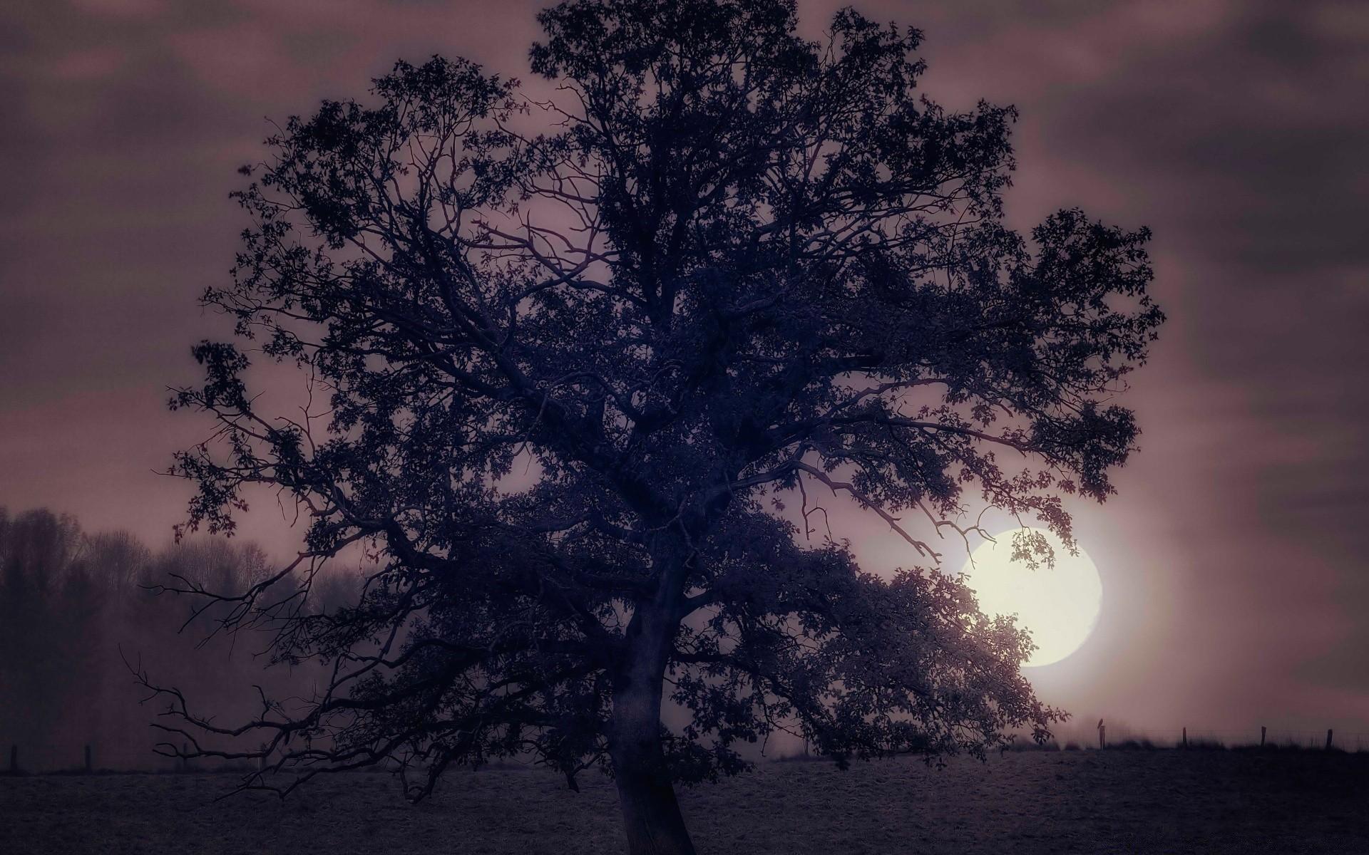 должен картинки деревьев ночью сорта виды раннего