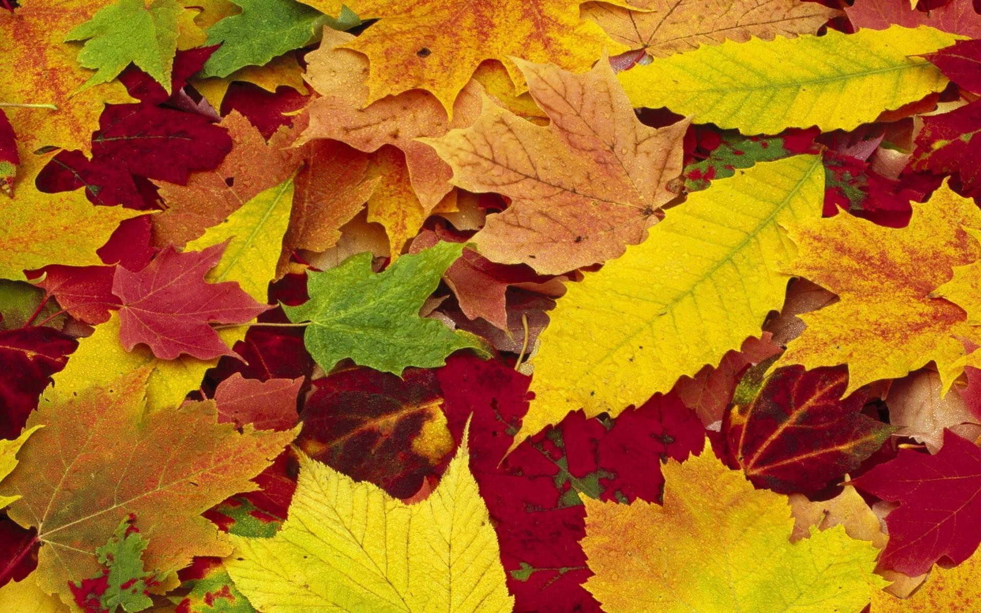 Картинки с листьев