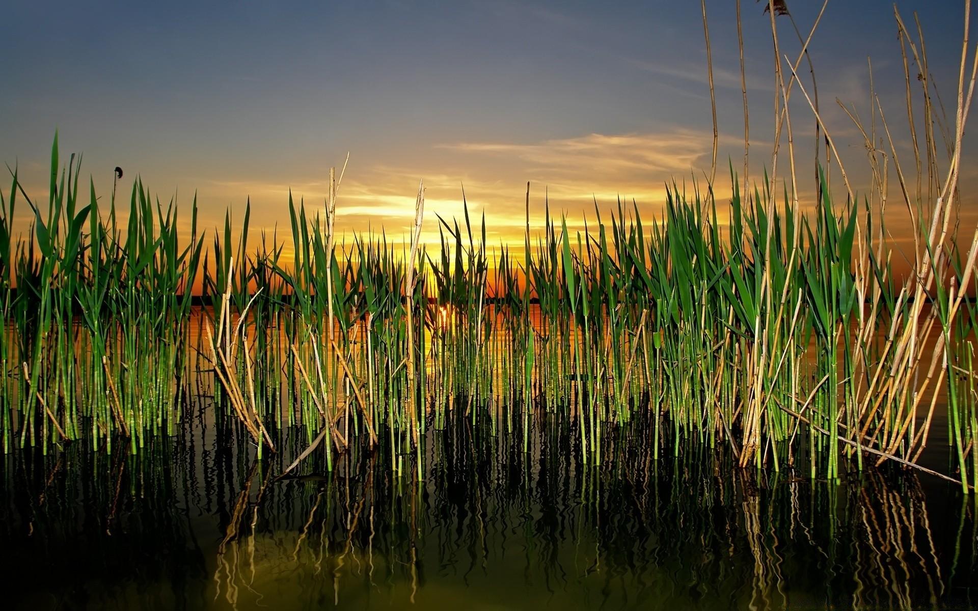 Картинки с камышами на озере, маленького разрешения