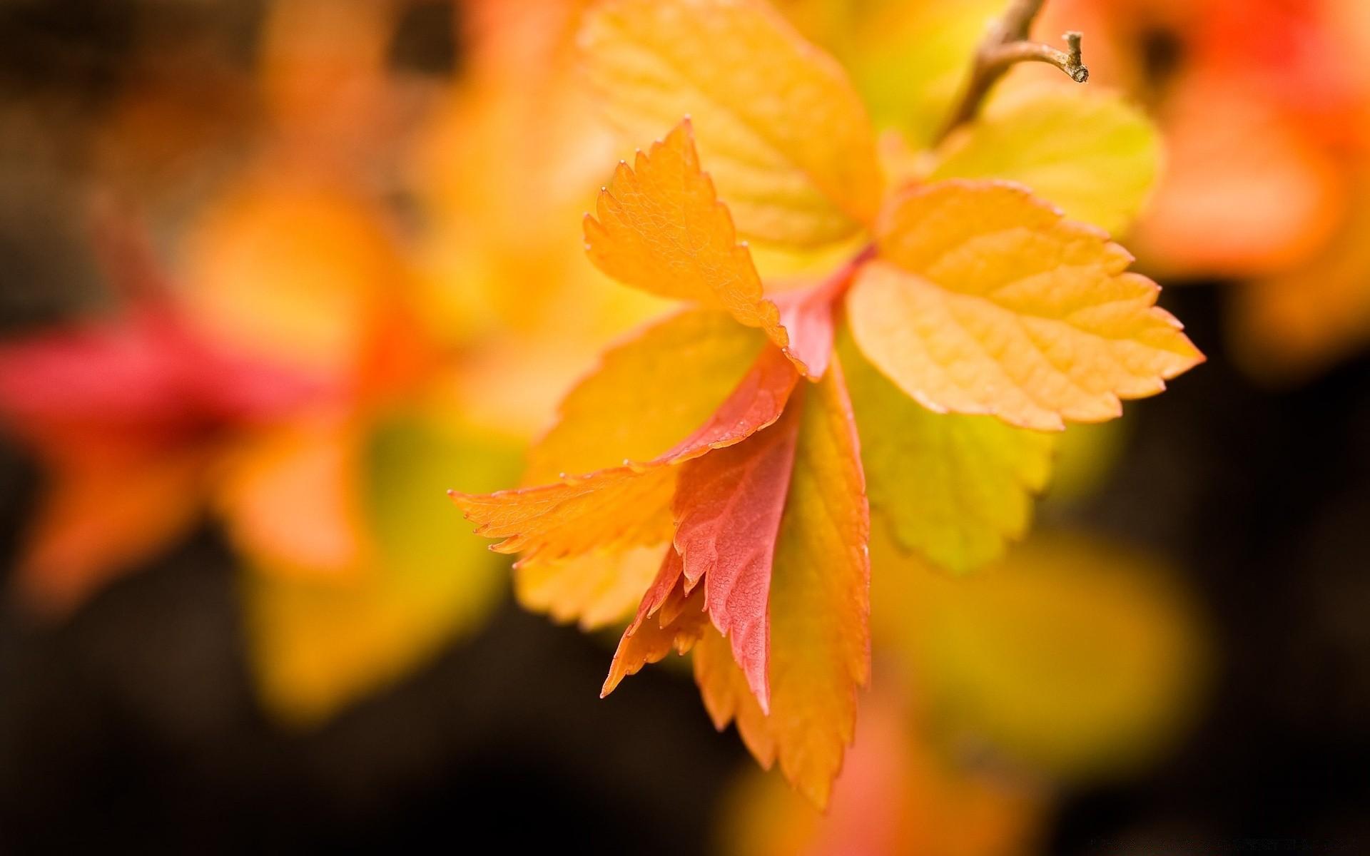 Открытка с листвой, днем