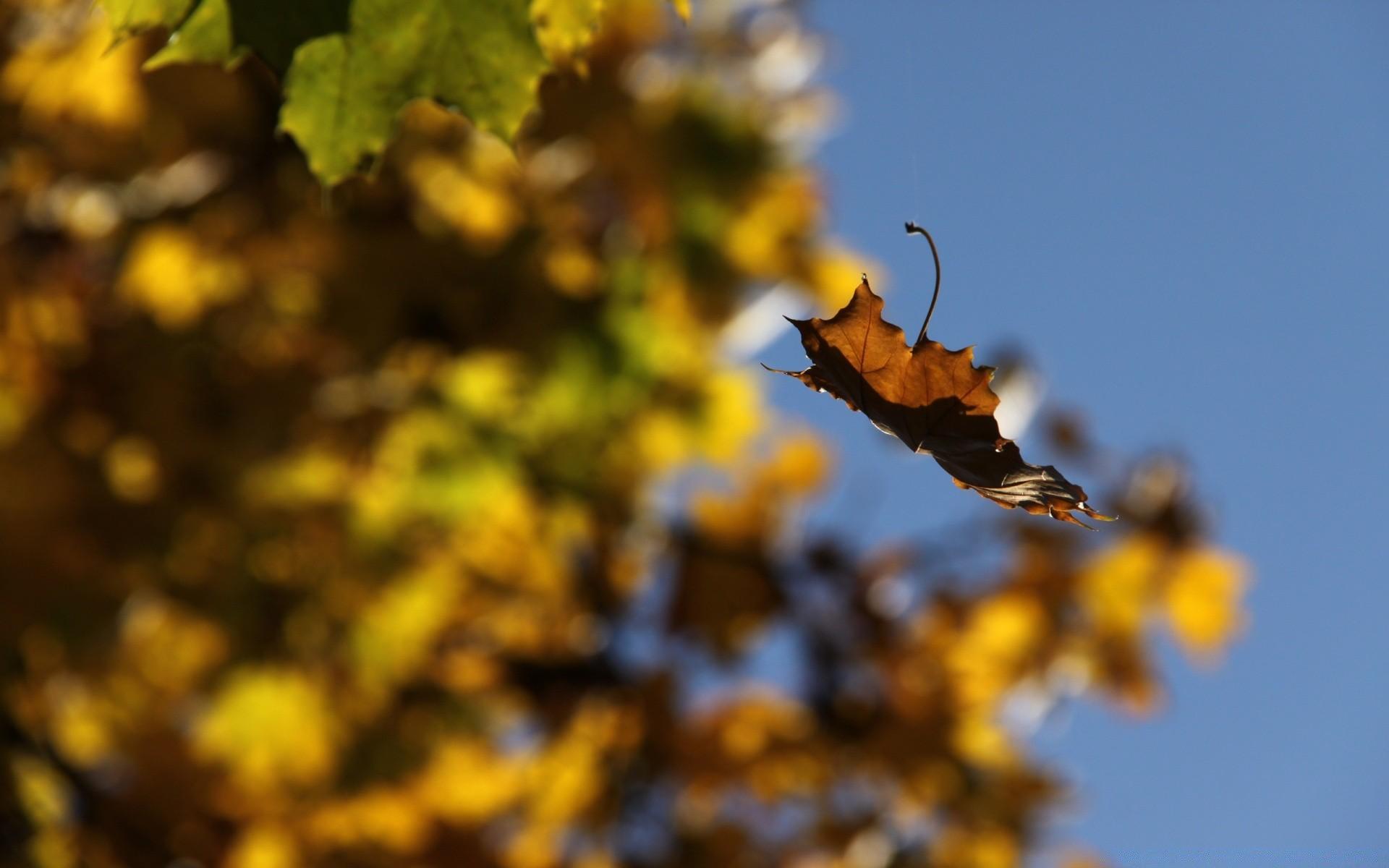 миллионов, одна картинки падающий осенний лист был разработан