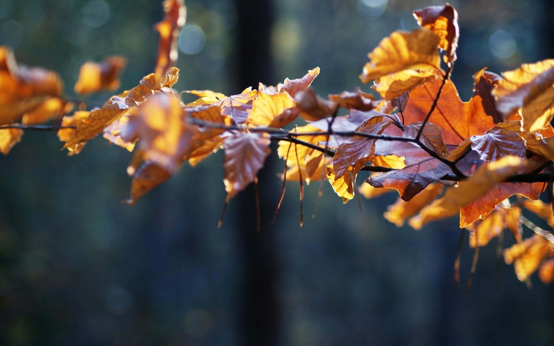 суккуб, осень поздняя картинки на рабочий стол красивые большие варианты как