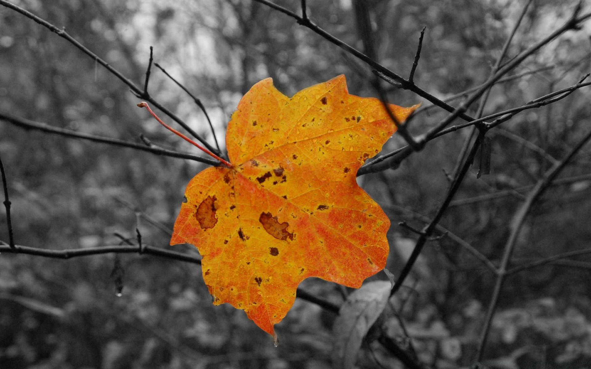обои на рабочий стол осень листья дождь этот раз стал