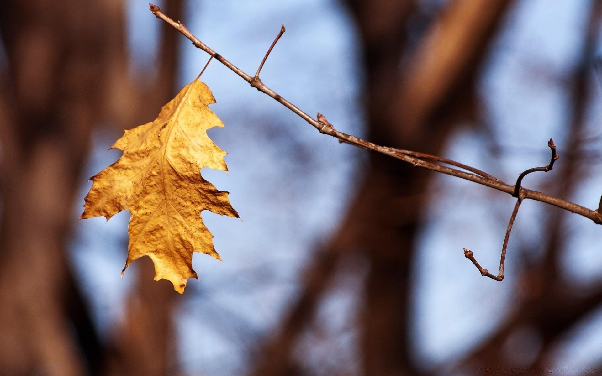 на березе листок вянет песня