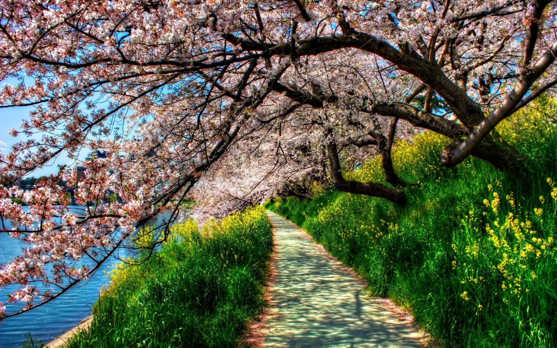 Весенний пейзаж картинки на телефон
